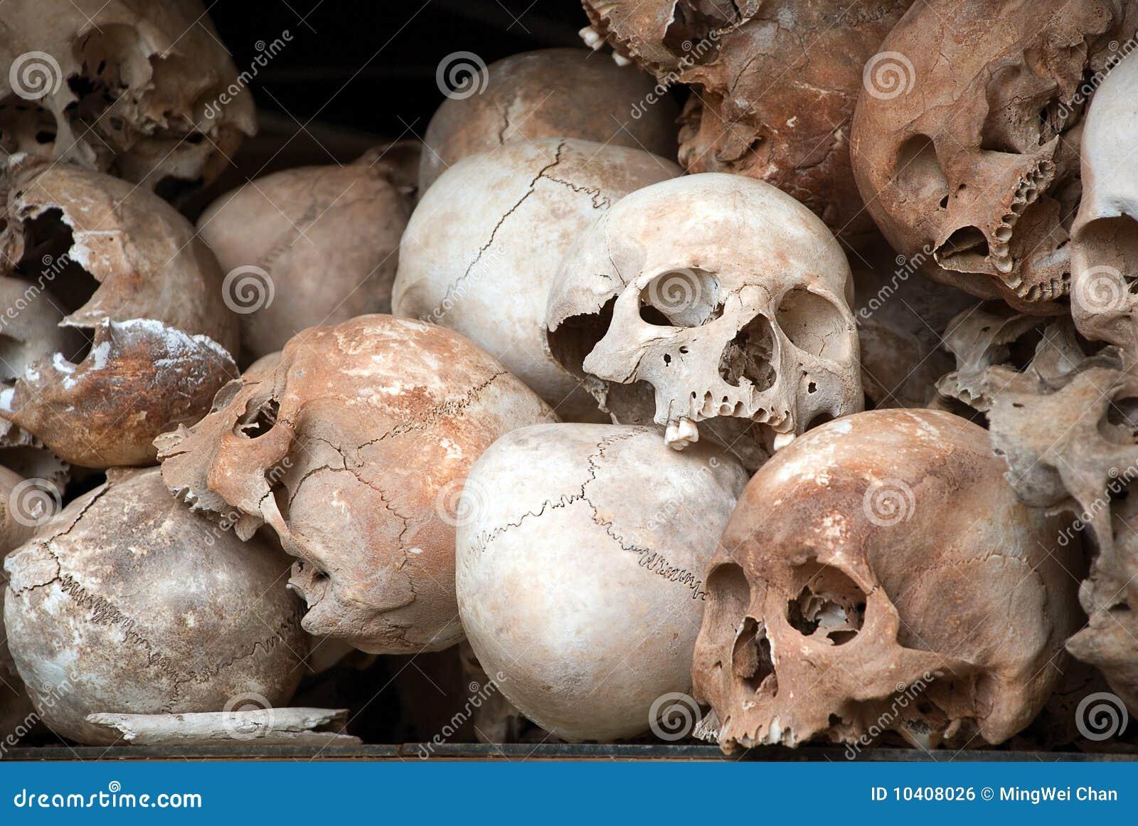 Human Skull Series 01