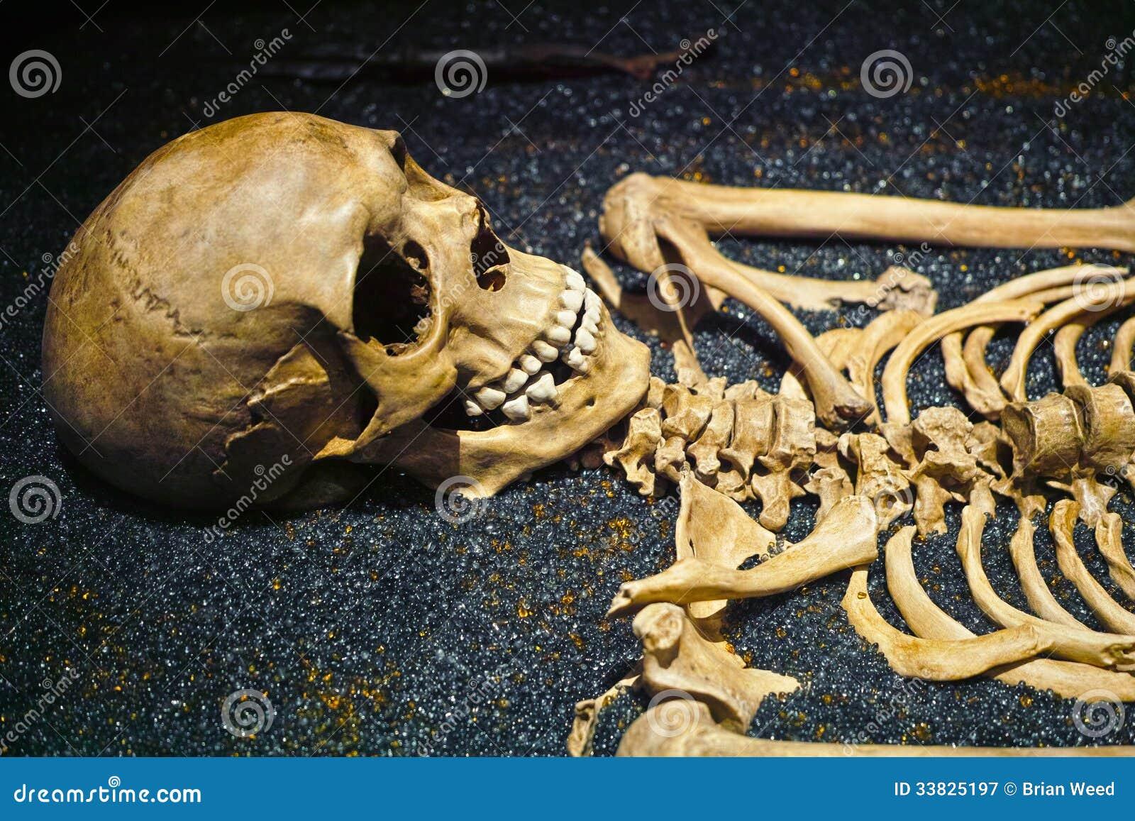 Human Skull and Skeleton Bones
