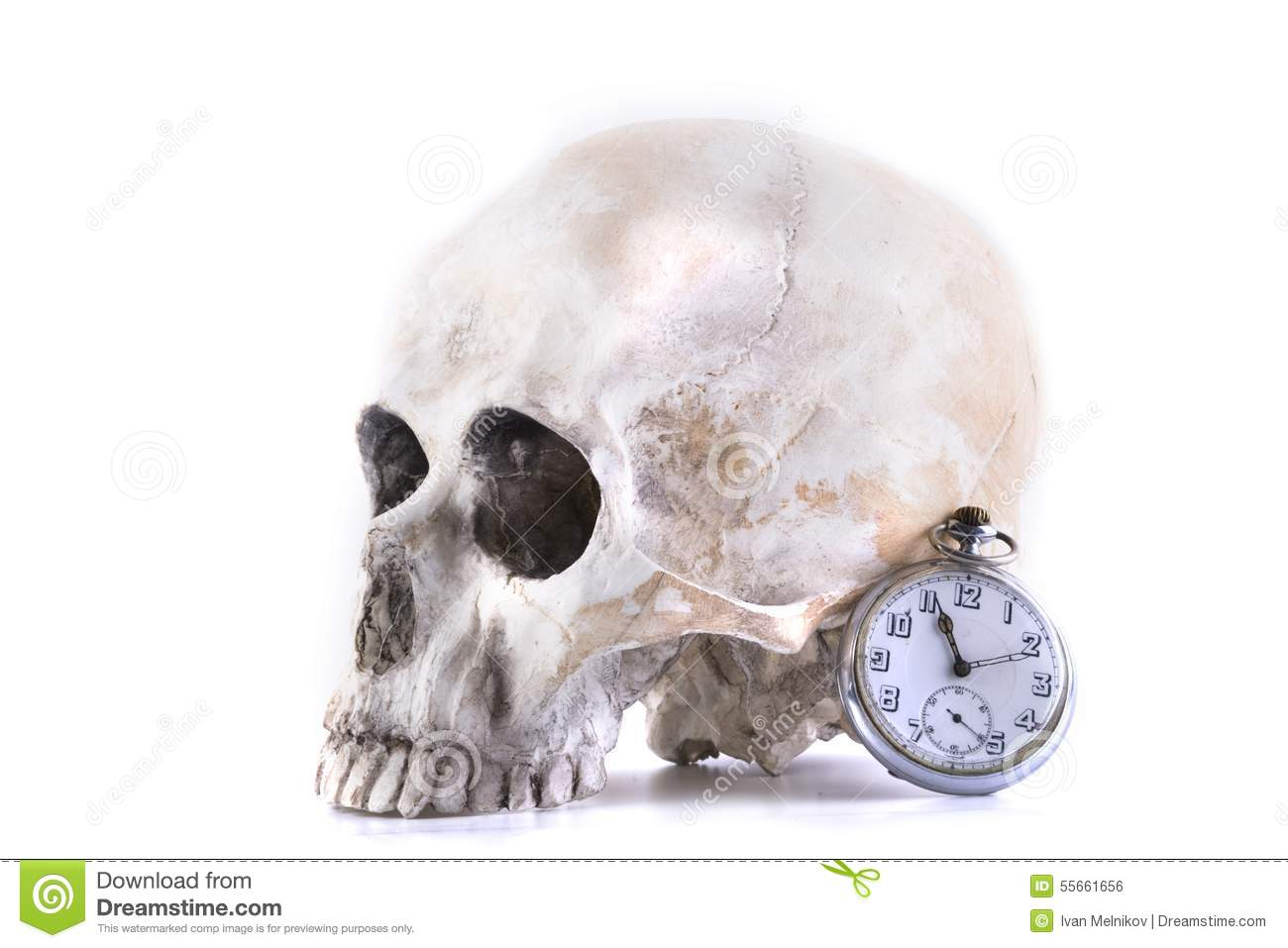 Human skull and watch
