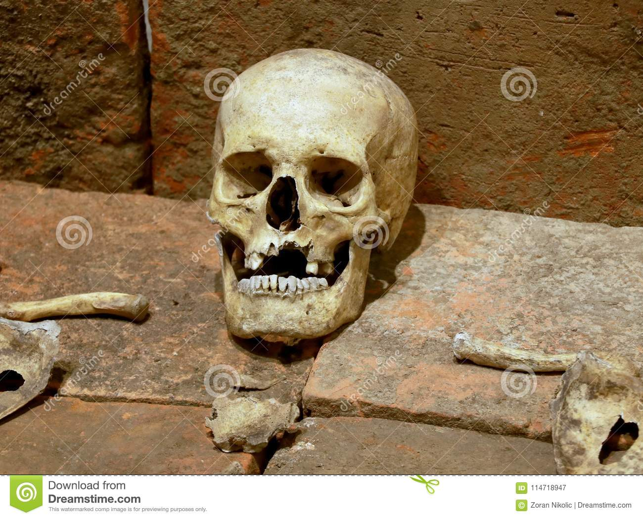 Human Skulls And Skeletal Parts Stock Image Image Of Abstract