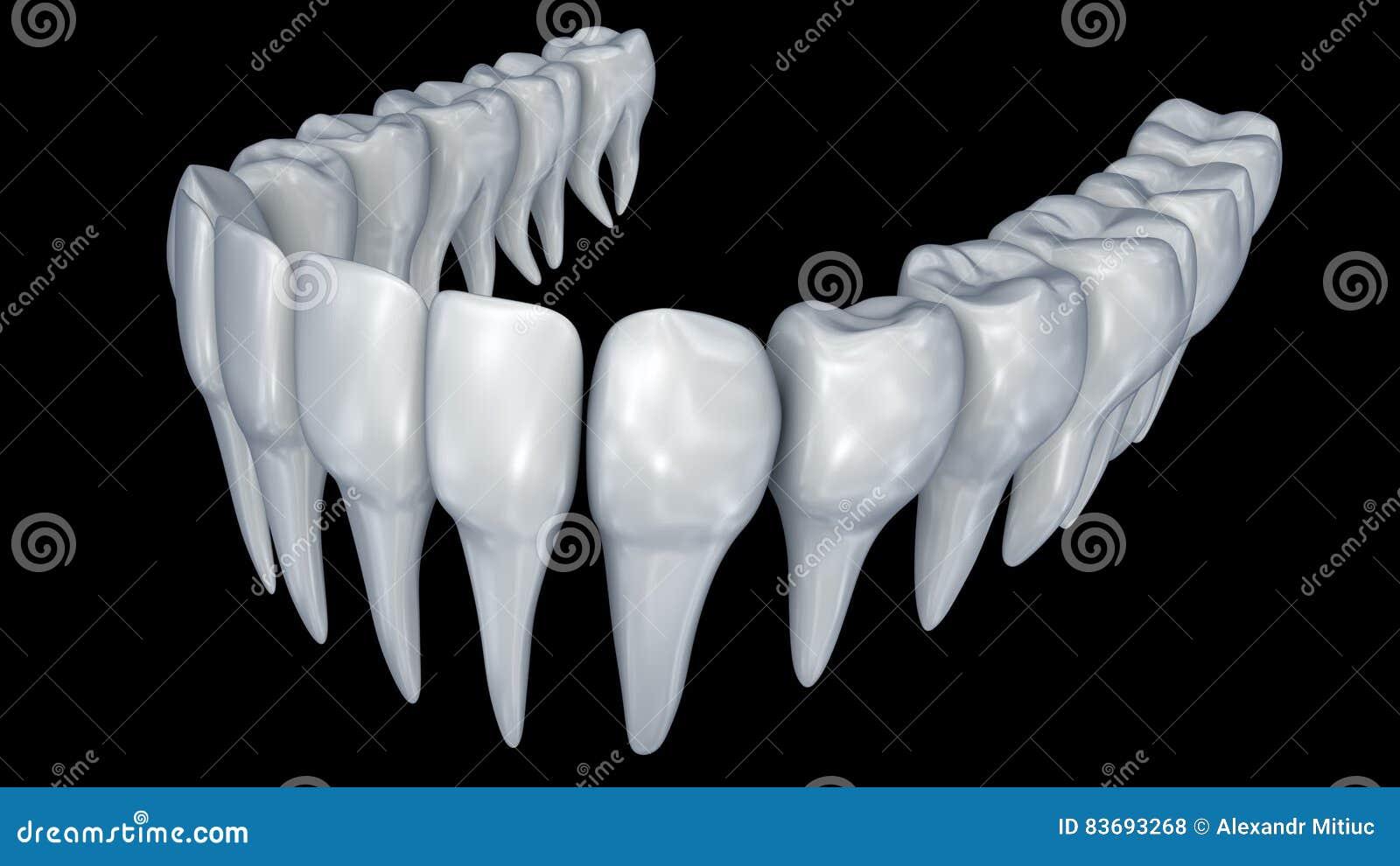 Human Teeth 3d Animation Stock Footage Illustration Of Dentistry