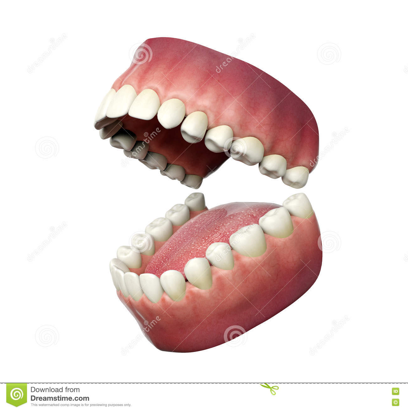 Human teeth opening on white background