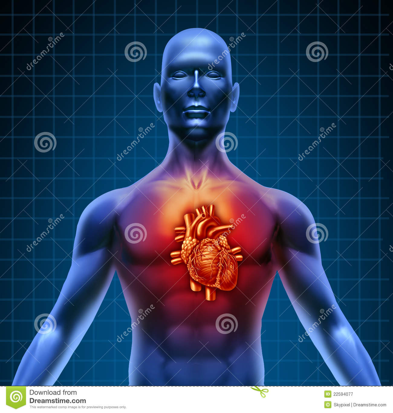 Human Torso With Red Heart Anatomy Stock Illustration - Illustration ...