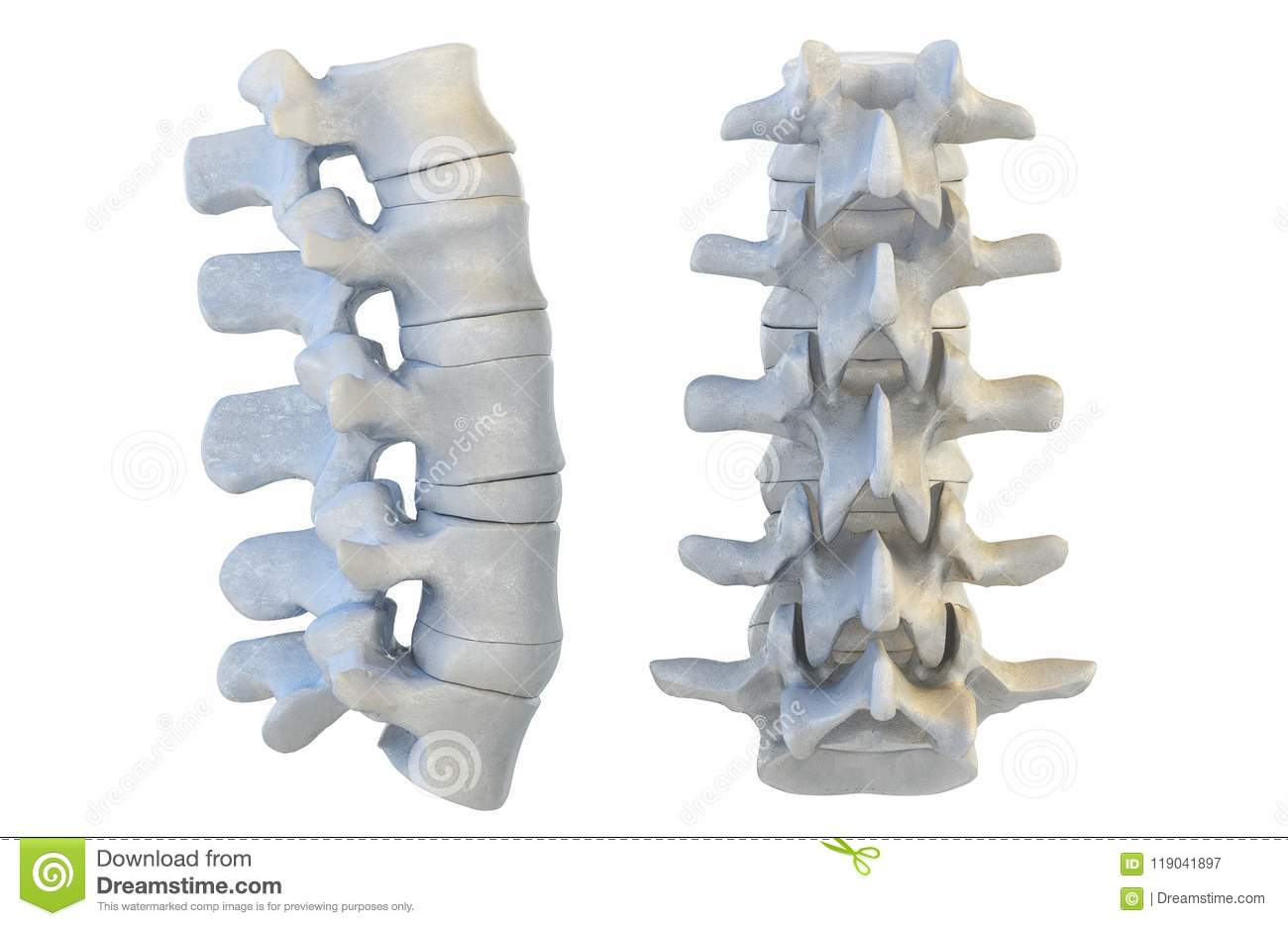 Human Vertebrae 3d Illustration Stock Illustration Illustration