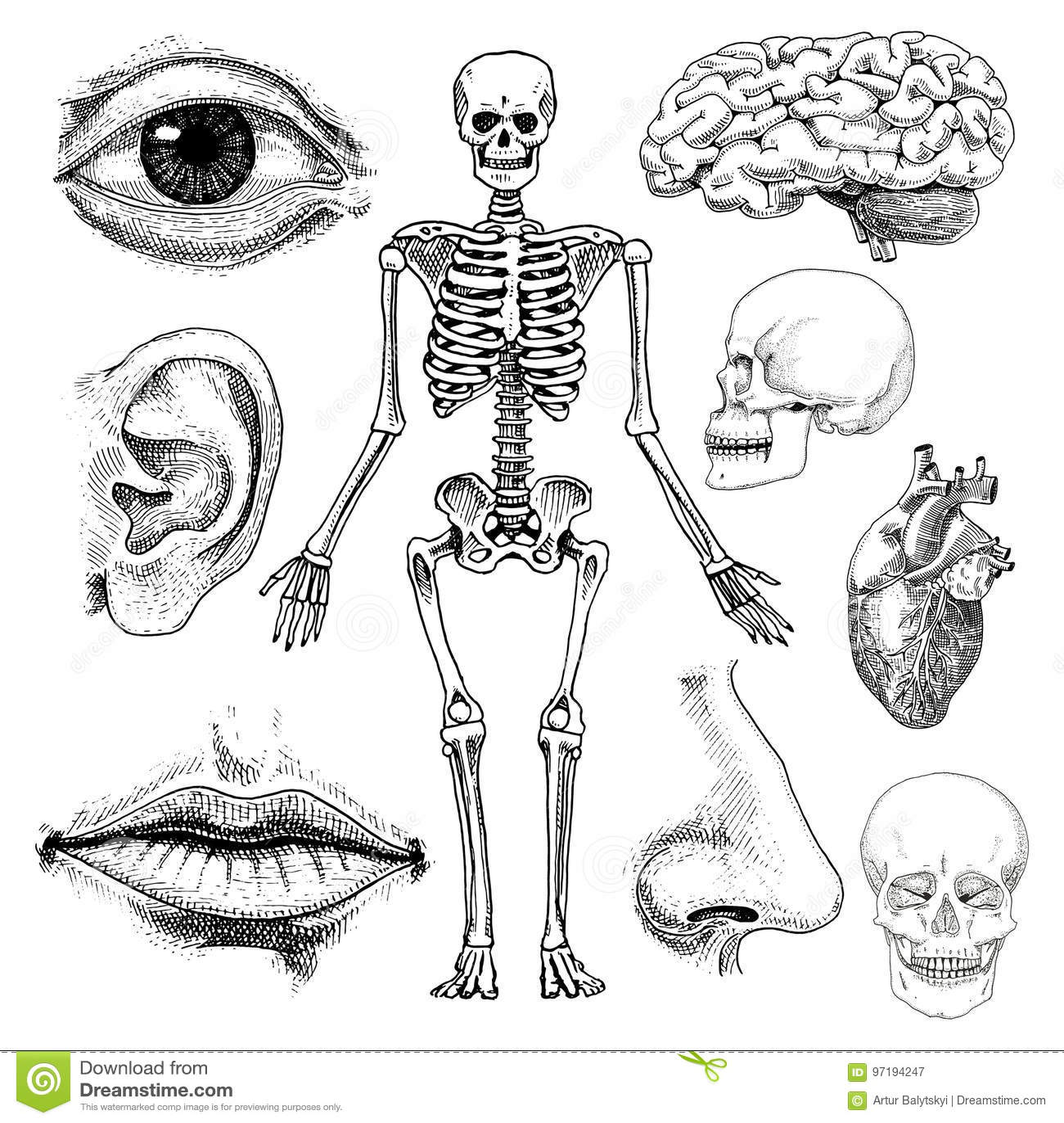 Großartig Hauptmuskelgruppen Anatomie Ideen - Anatomie Ideen ...