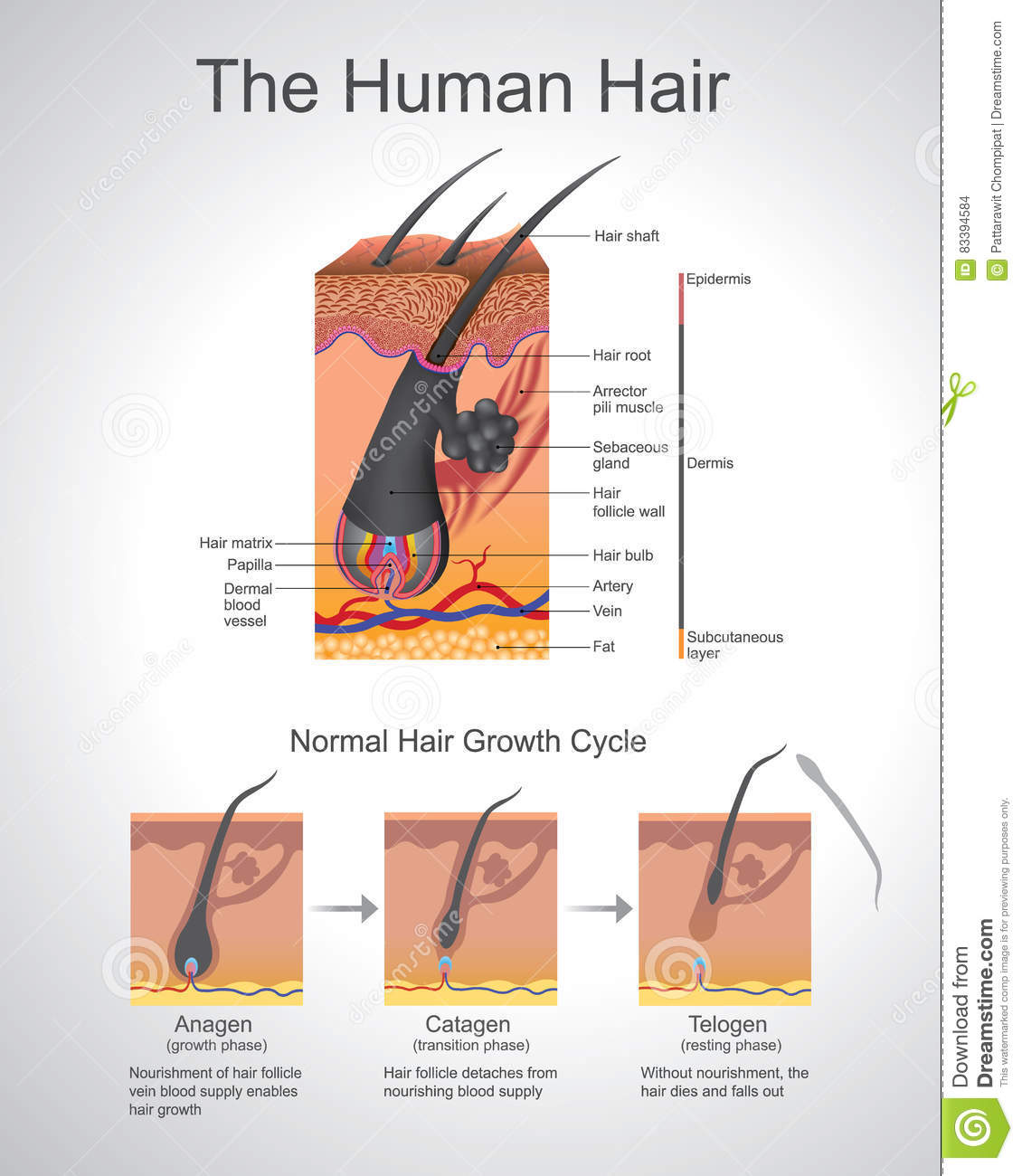 Humann Hair stock vector Image of comedo growth