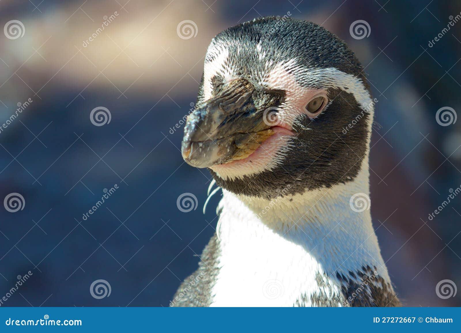 Humboldt企鹅纵向