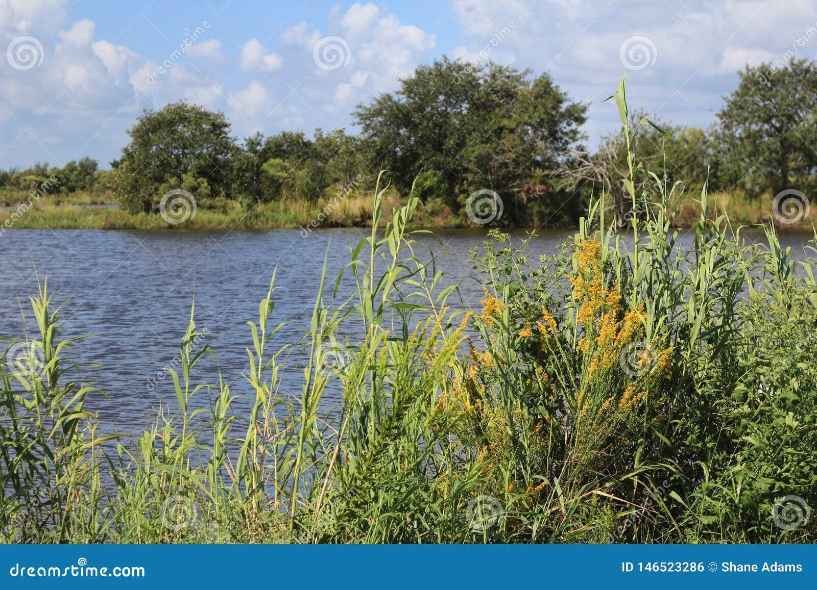 Humedales del pantano de Luisiana