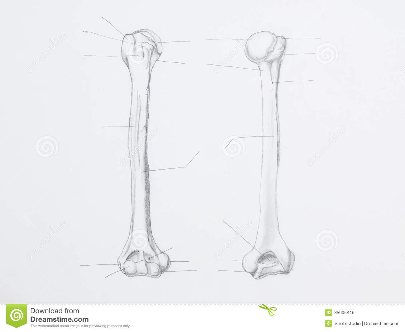 Humerus Pencil Drawing Royalty Free Stock Image - Image: 35006416