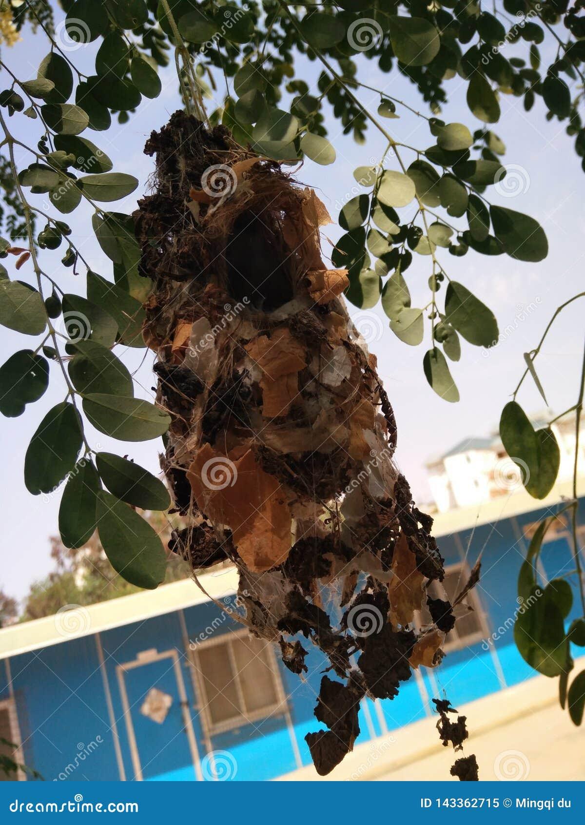 Hummbird' гнездо s