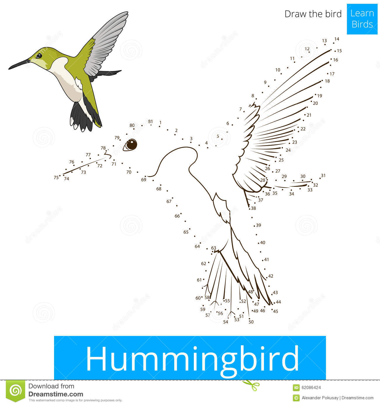 Download Hummingbird Bird Learn To Draw Vector Stock