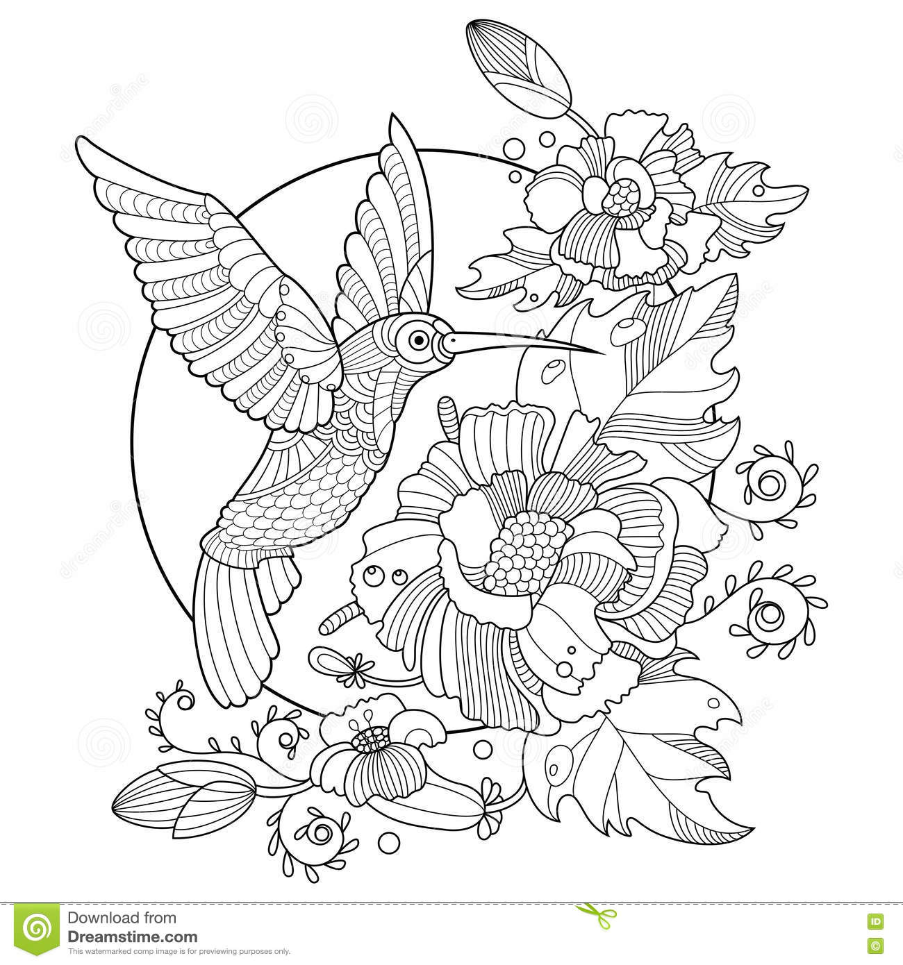 Hummingbird Coloring Book For Adults Vector Stock Vector ...