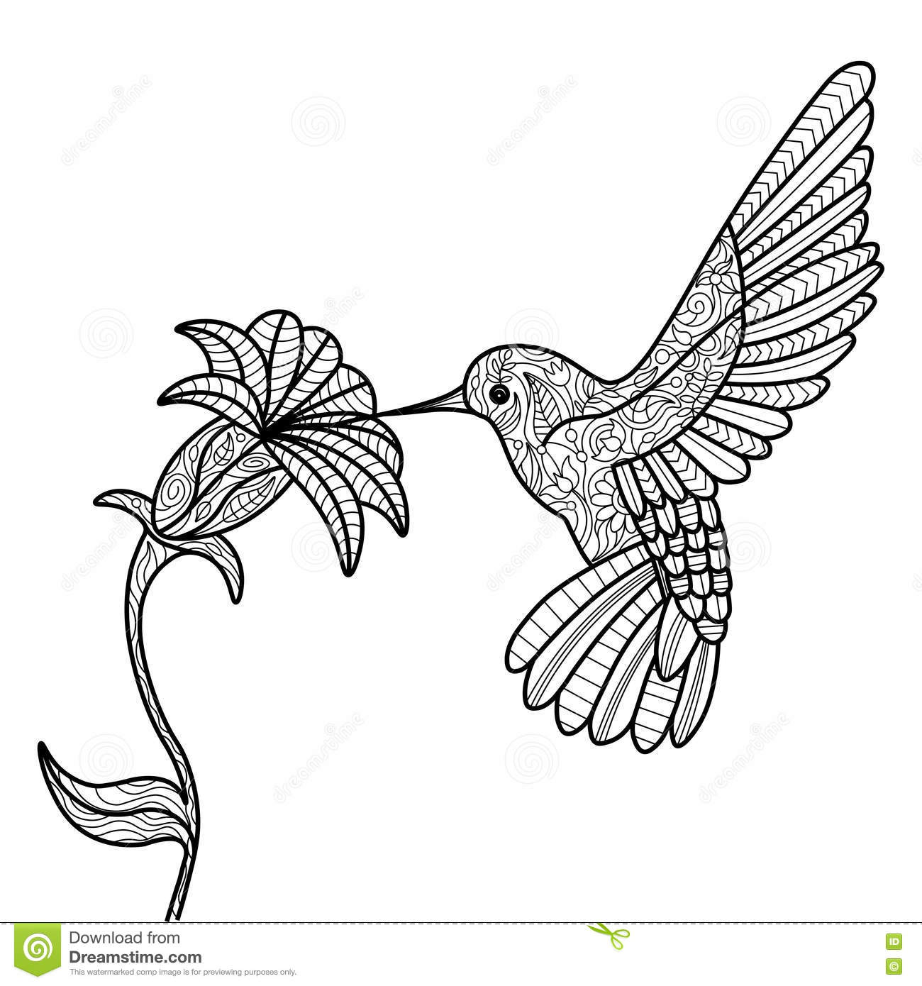Hummingbird Coloring Book For Adults Vector Vector