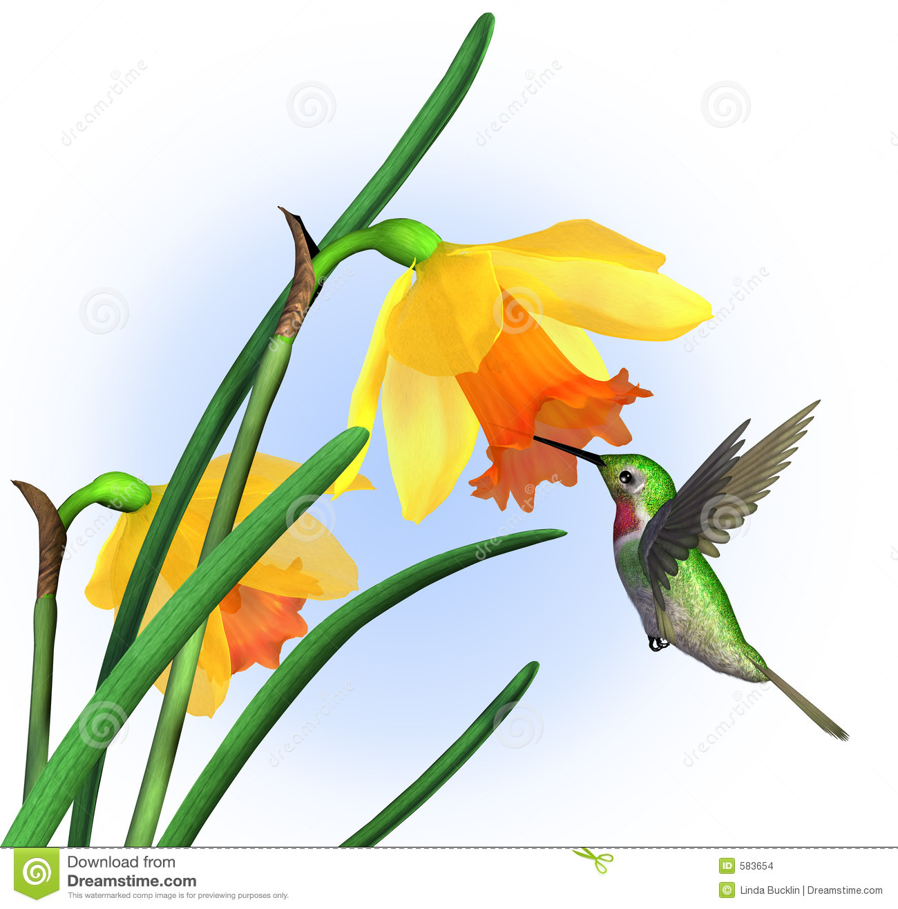 Hummingbird With Daffodils With Clipping Path Stock