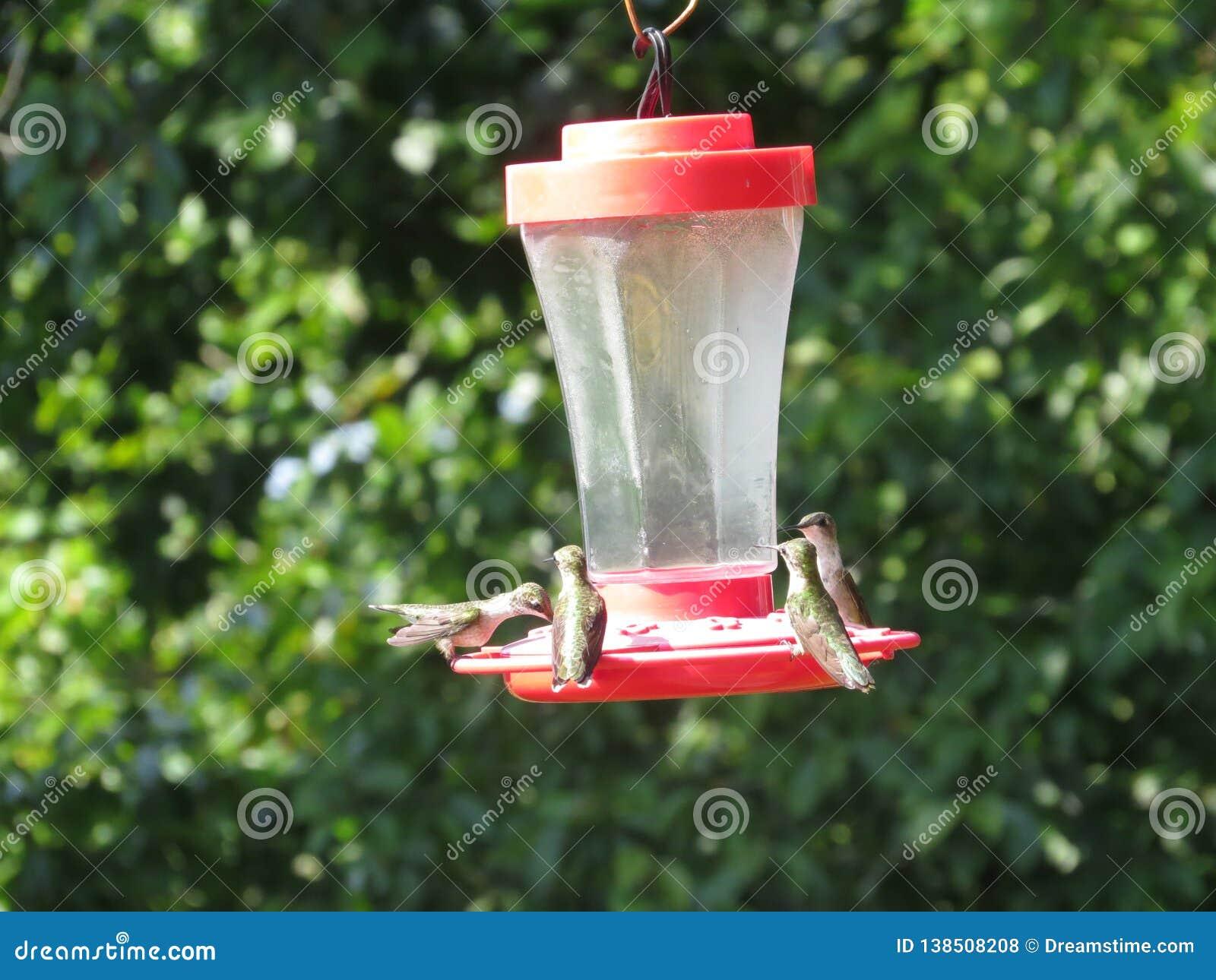 Hummingbird Dinnertime