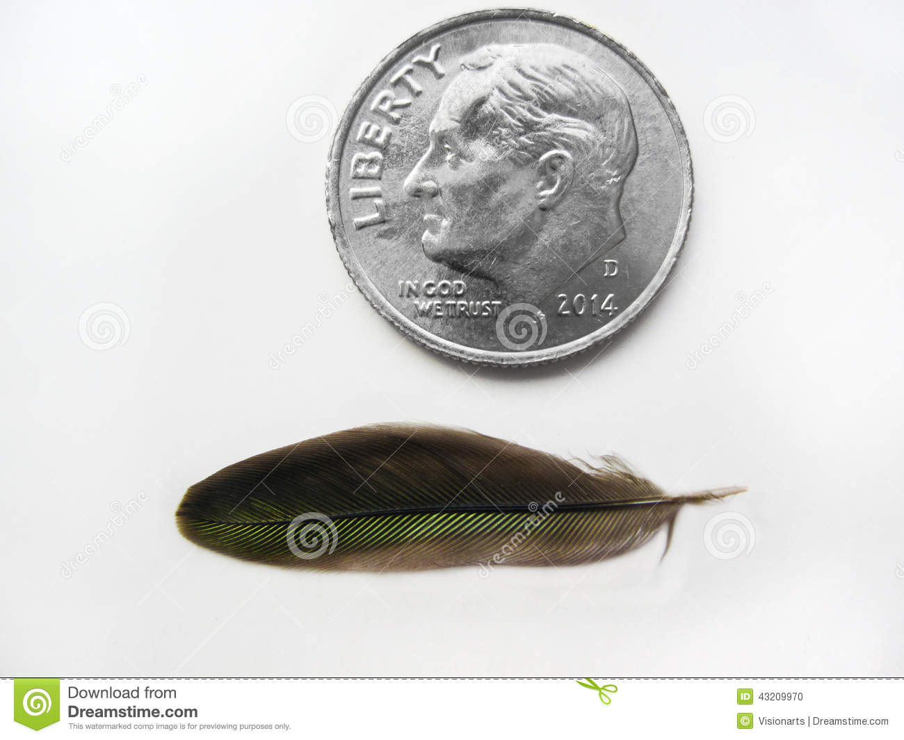 hummingbird feather with coin comparison stock photo image of