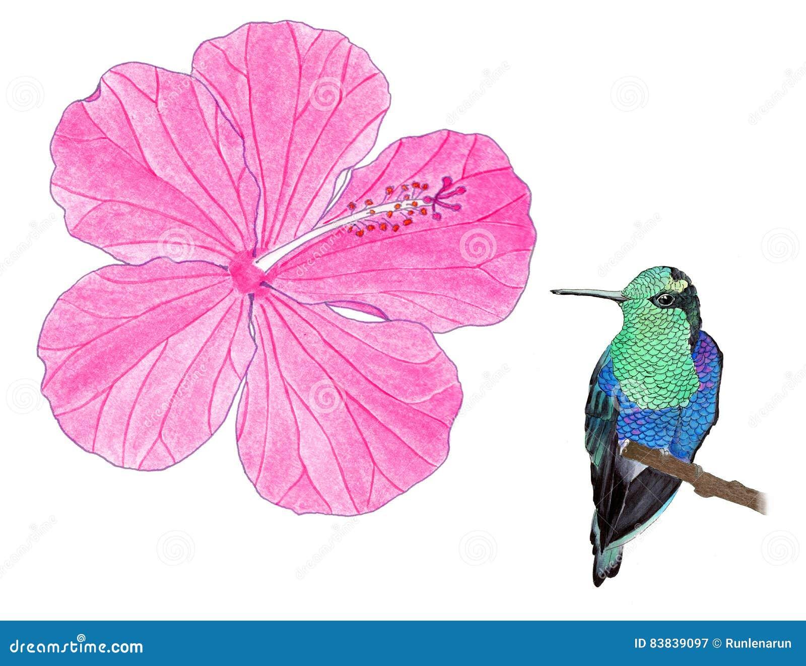 Hummingbird And Hibiscus Watercolor Illustration Stock Illustration
