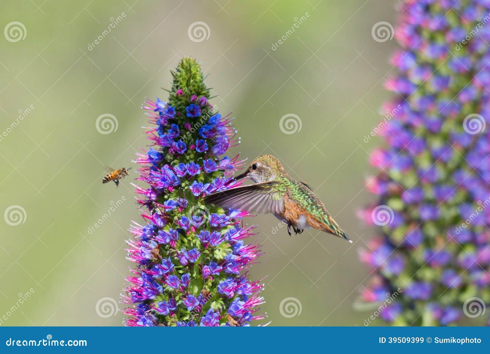 Hummingbird and Honey Bee