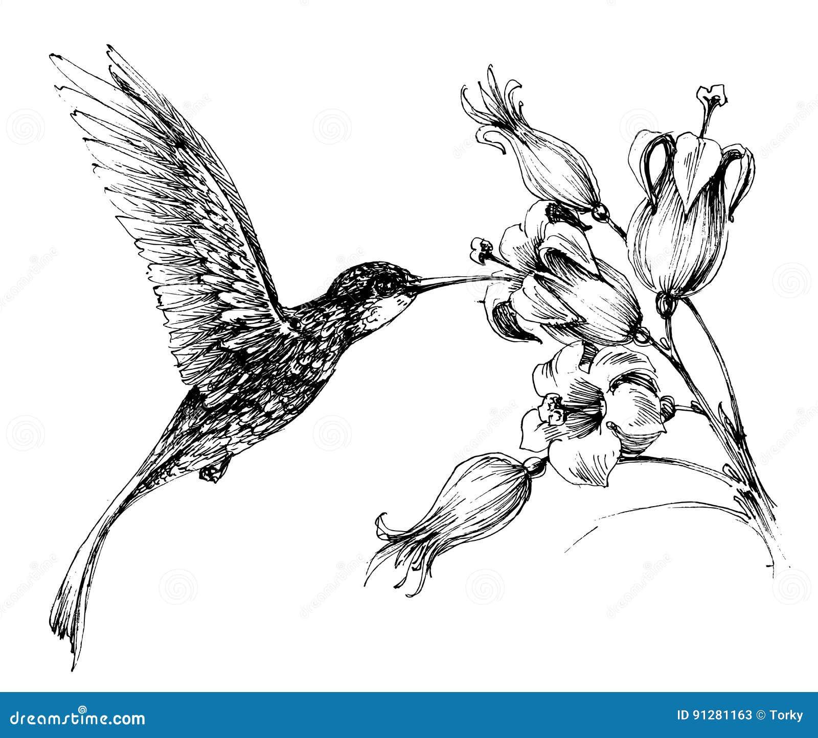 Hummingbird i flyg