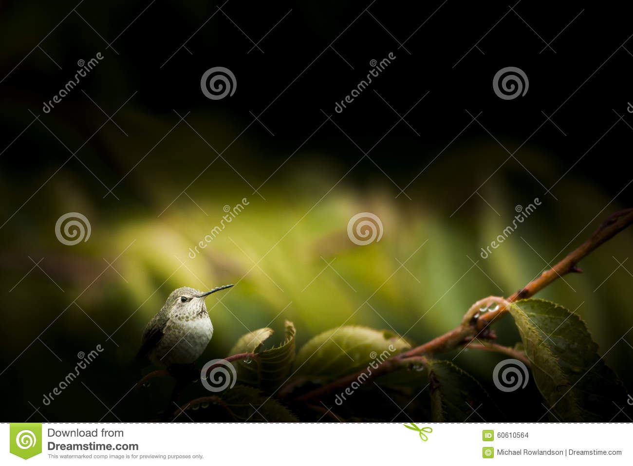 Hummingbird Perched on Branch