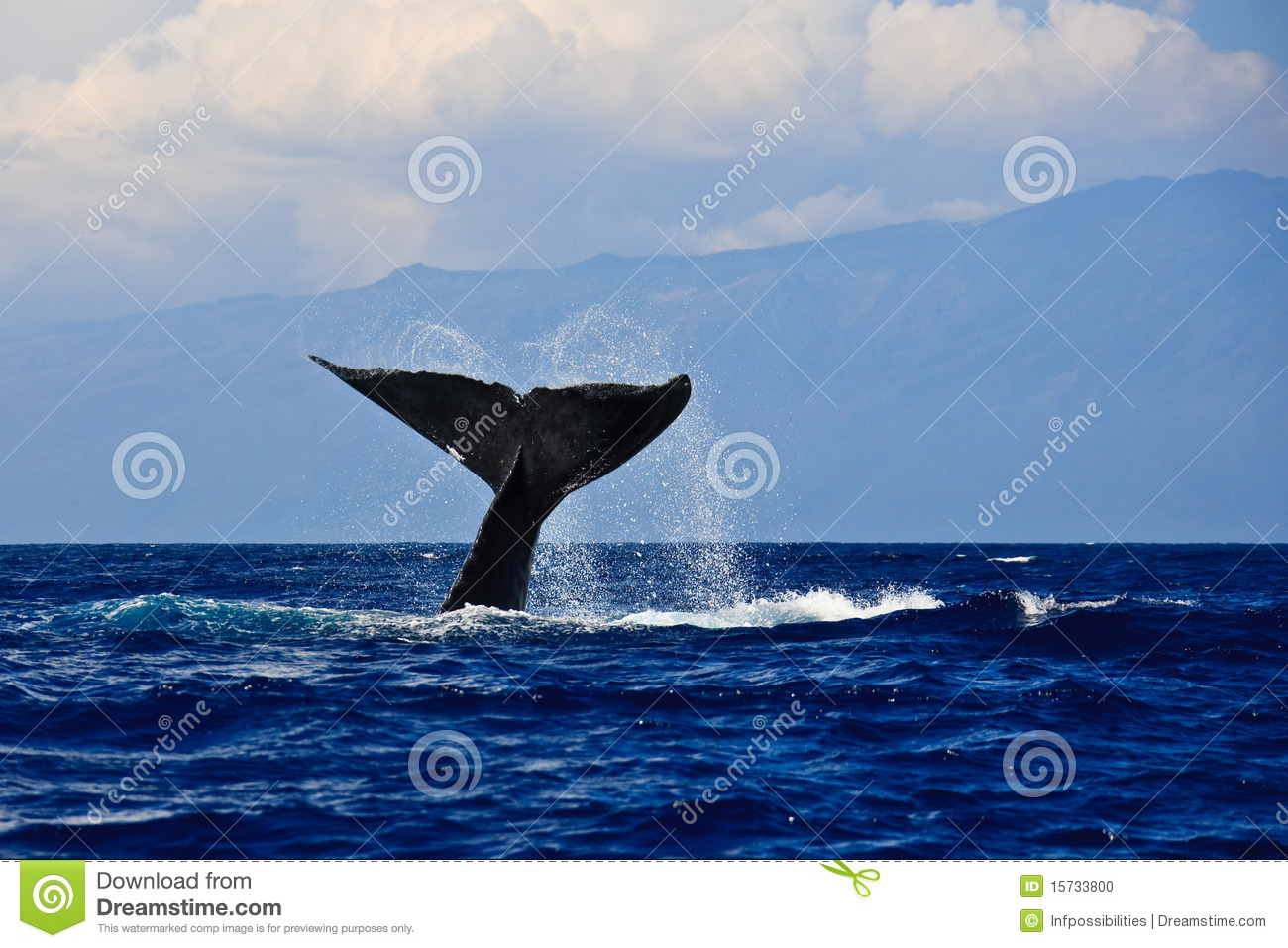 Huge Humpback Whale Tail Royalty-Free Stock Photo ...