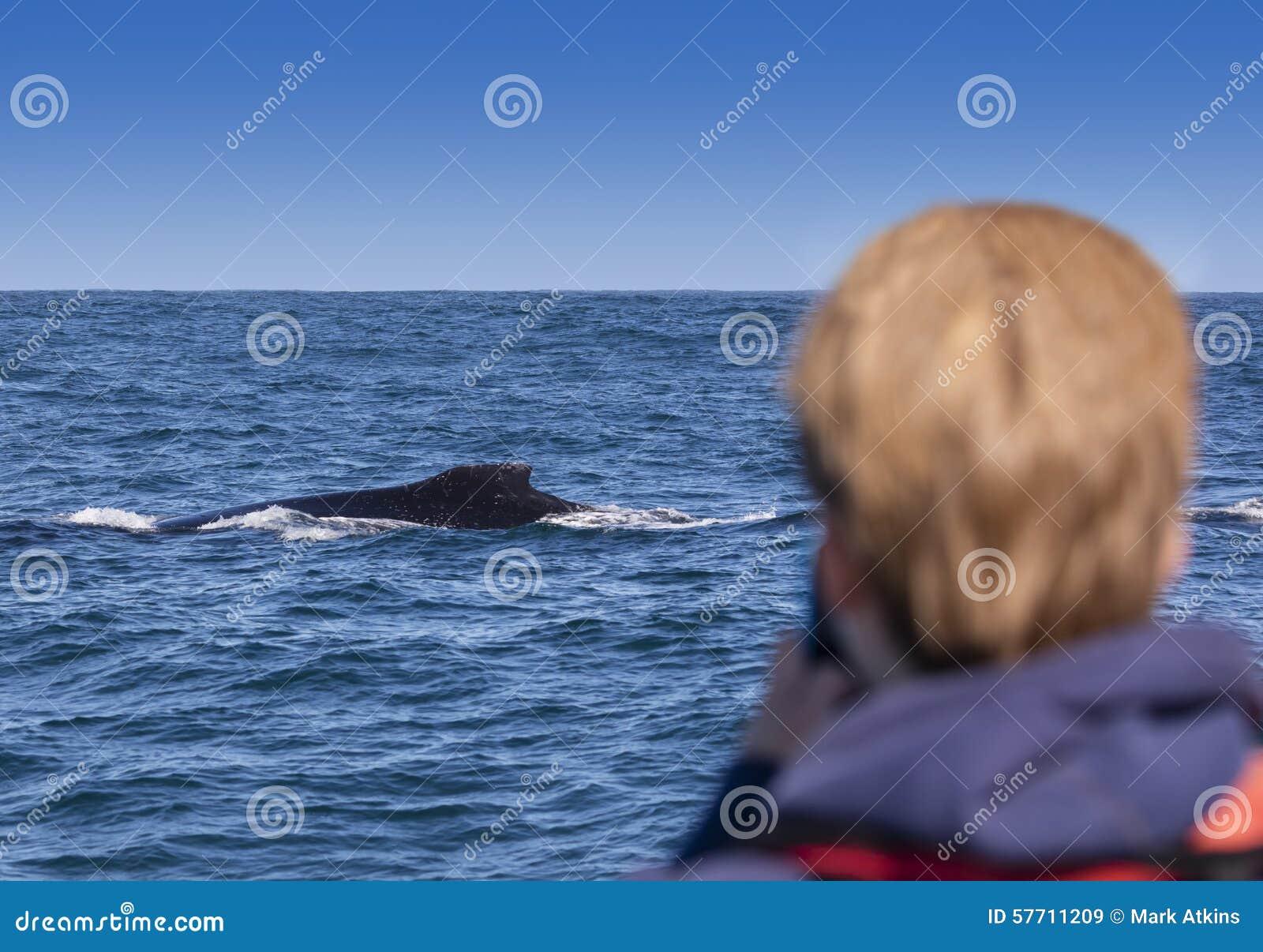 Humpback wieloryba dopatrywanie