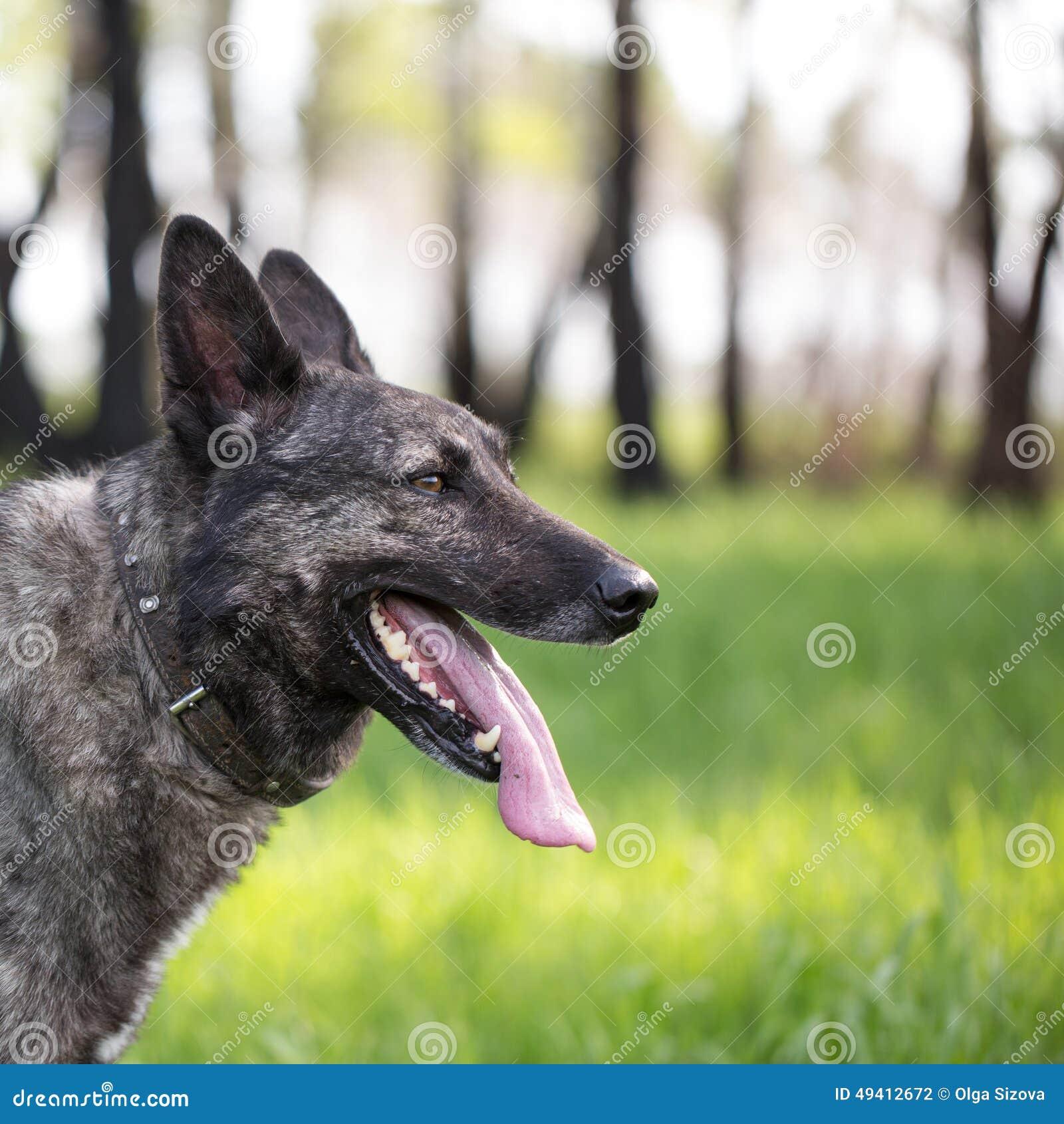 Download Hund auf dem Gras stockfoto. Bild von rasen, behaart - 49412672