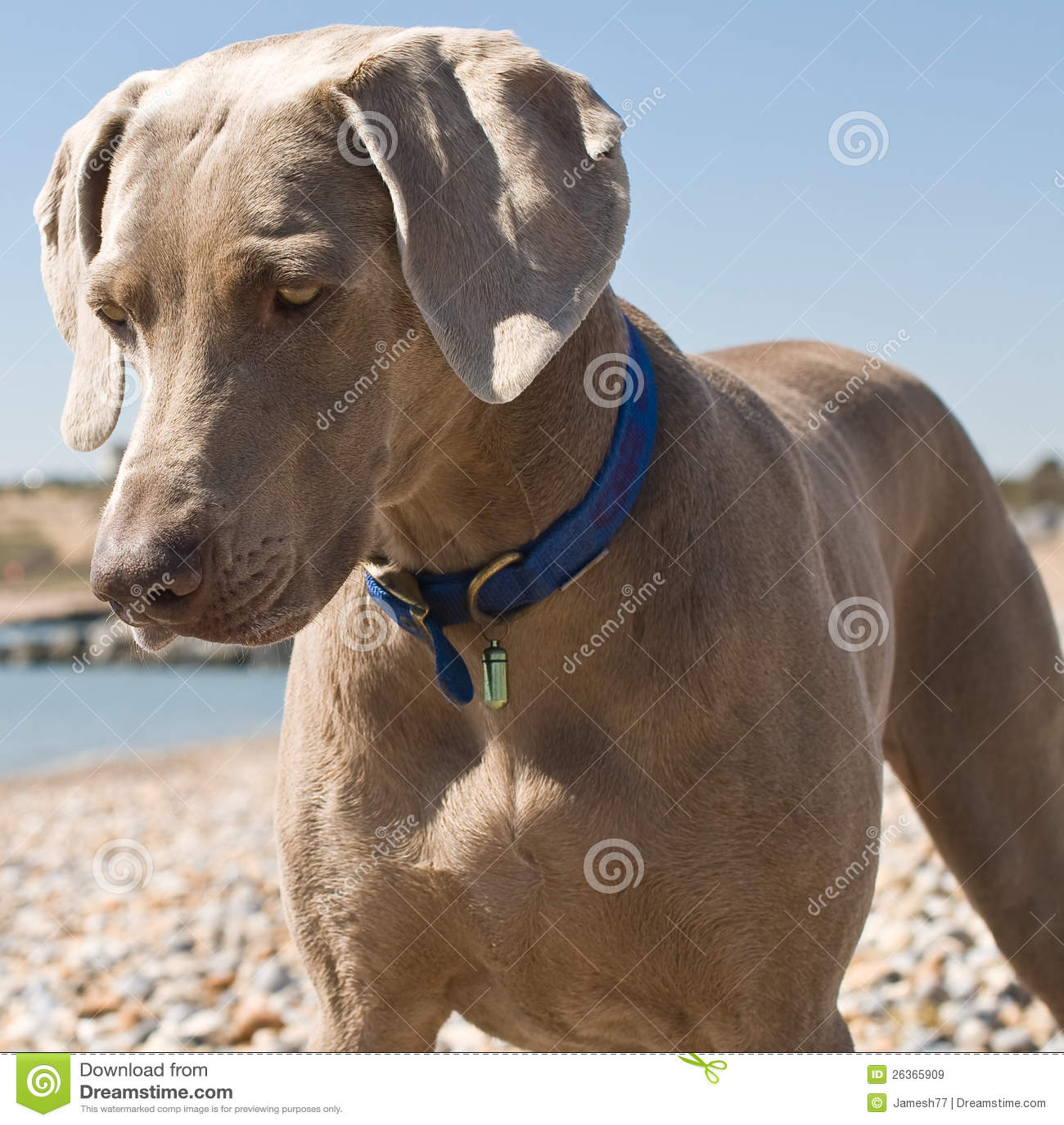 Hund auf dem Strand
