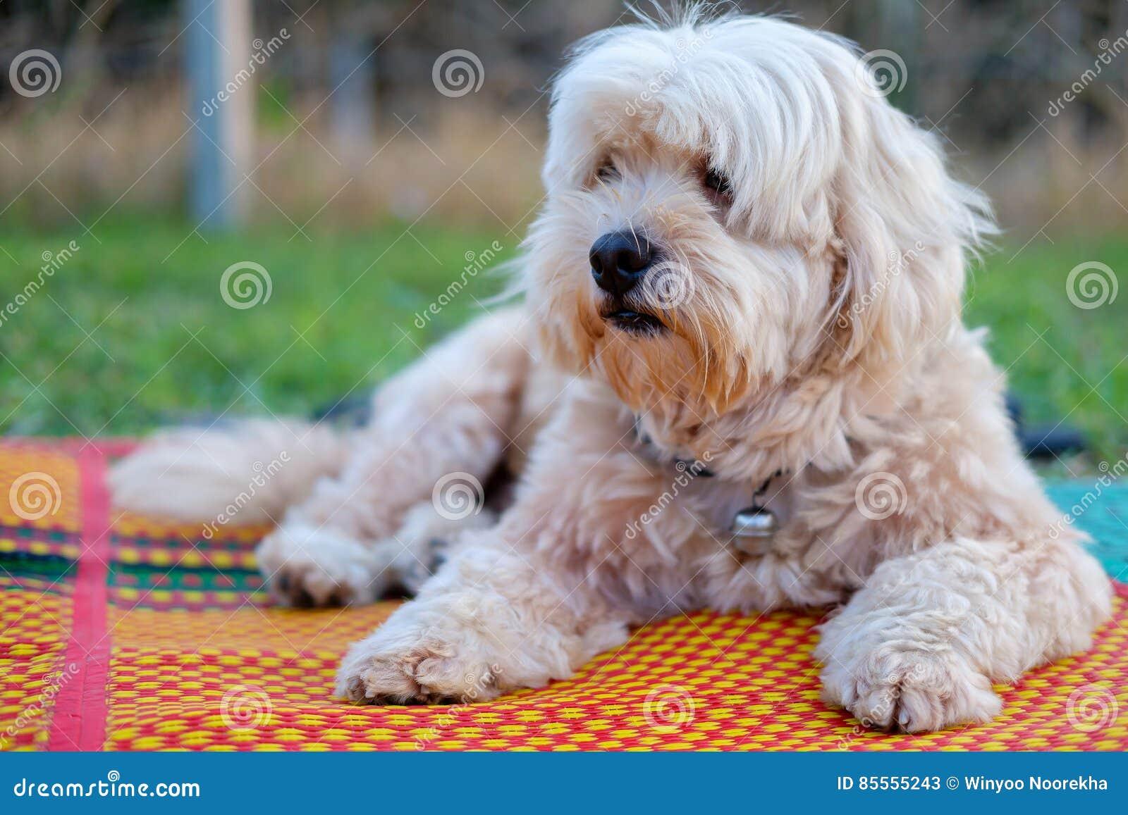 Hund auf der Matte