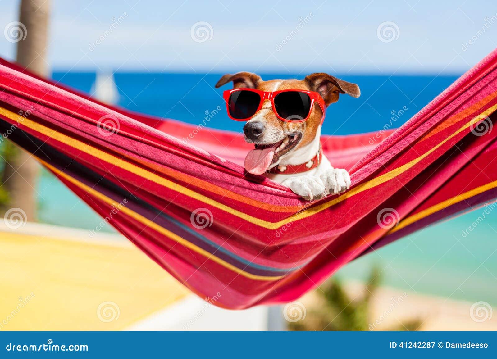 Hund Auf H 228 Ngematte Stockfoto Bild 41242287