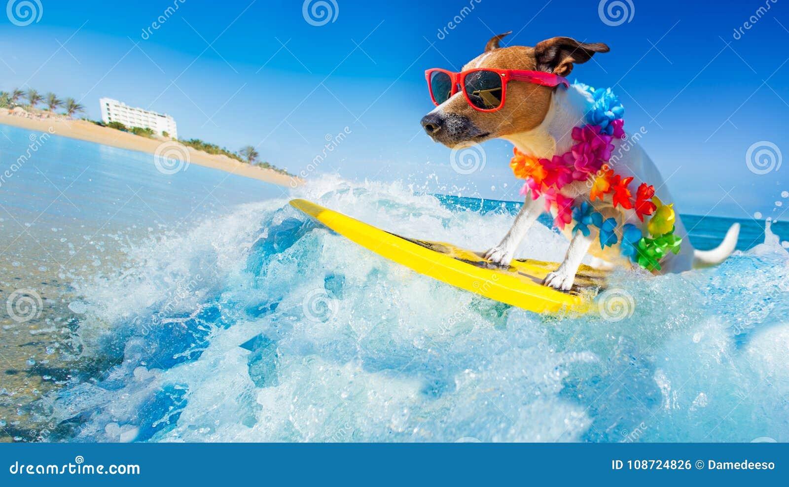 Hund, der auf eine Welle surft