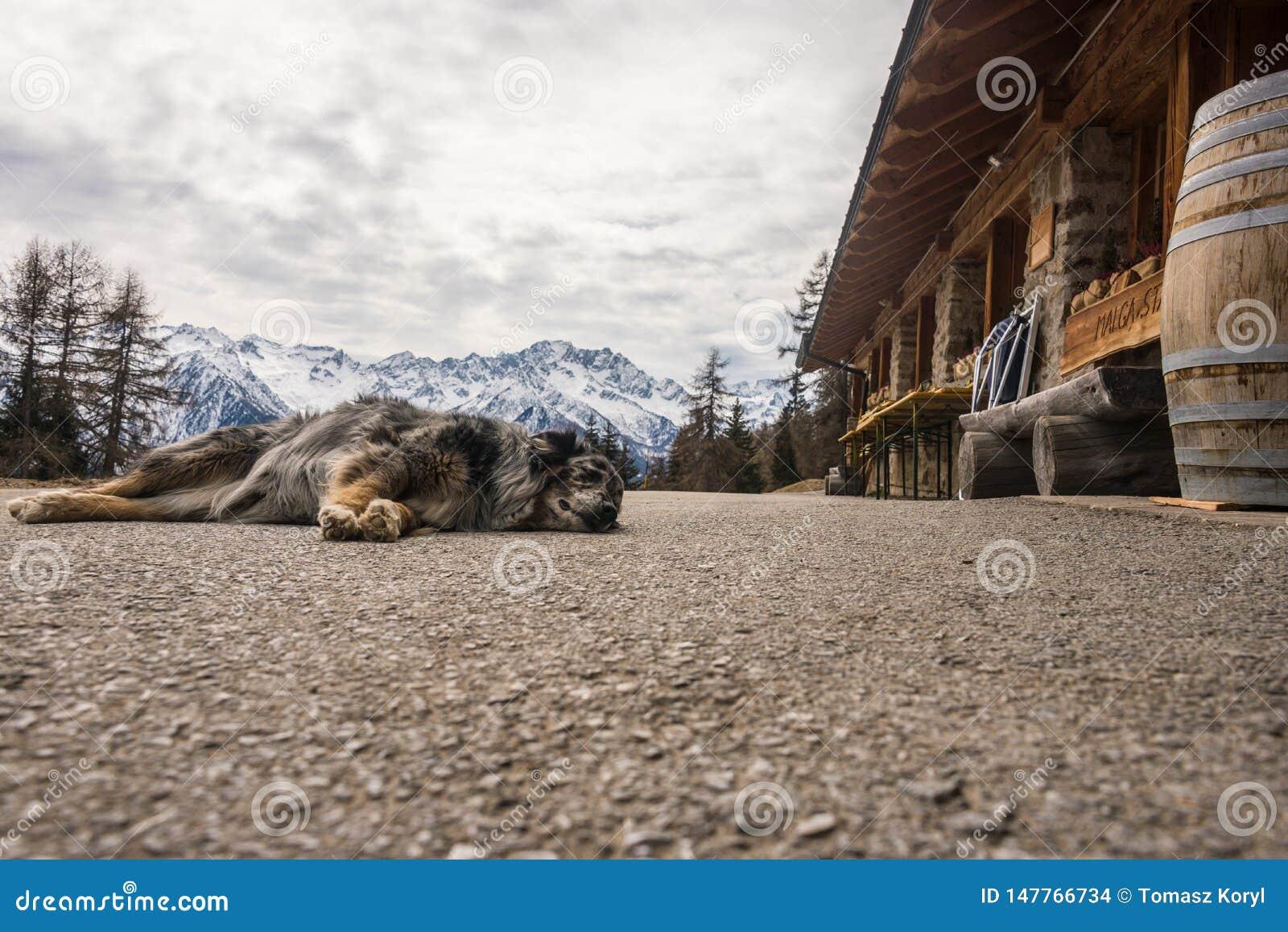 Hund, der auf Gebirgsstra?e schl?ft Schnee-mit einer Kappe bedeckte Berge am Hintergrund