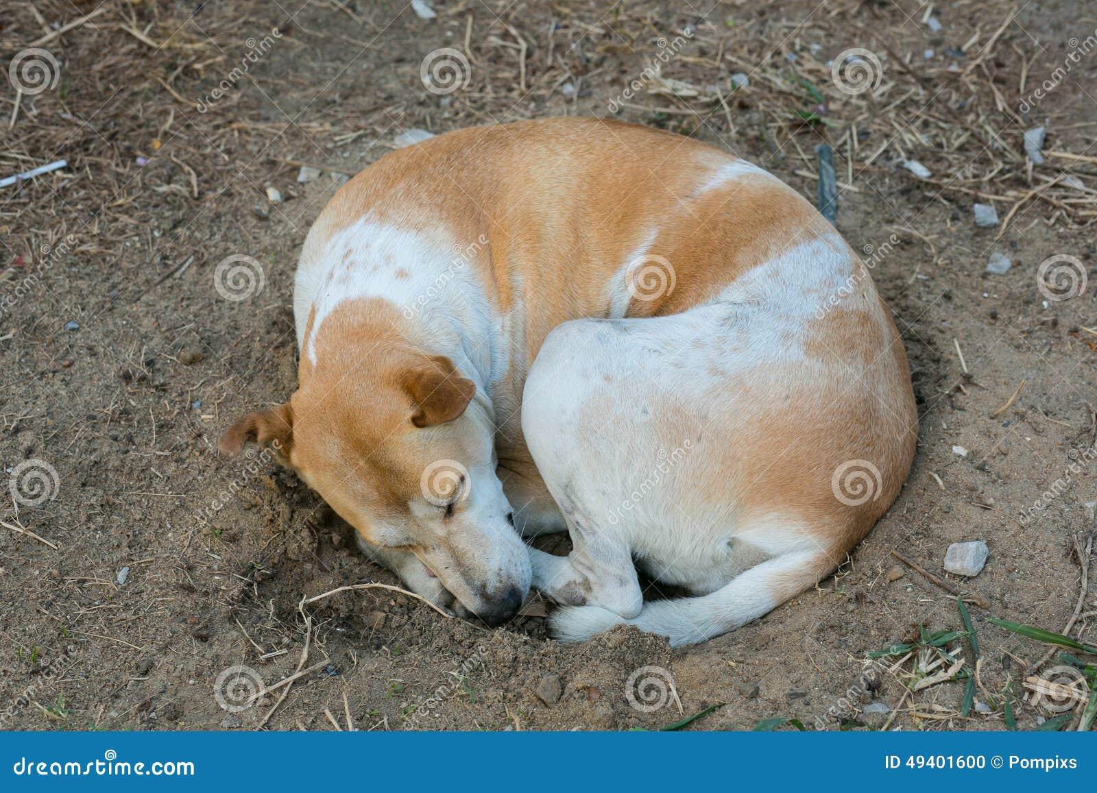Download Hund, Der Auf Schmutzigem Sandloch Schläft Stockfoto - Bild von hund, schlummer: 49401600