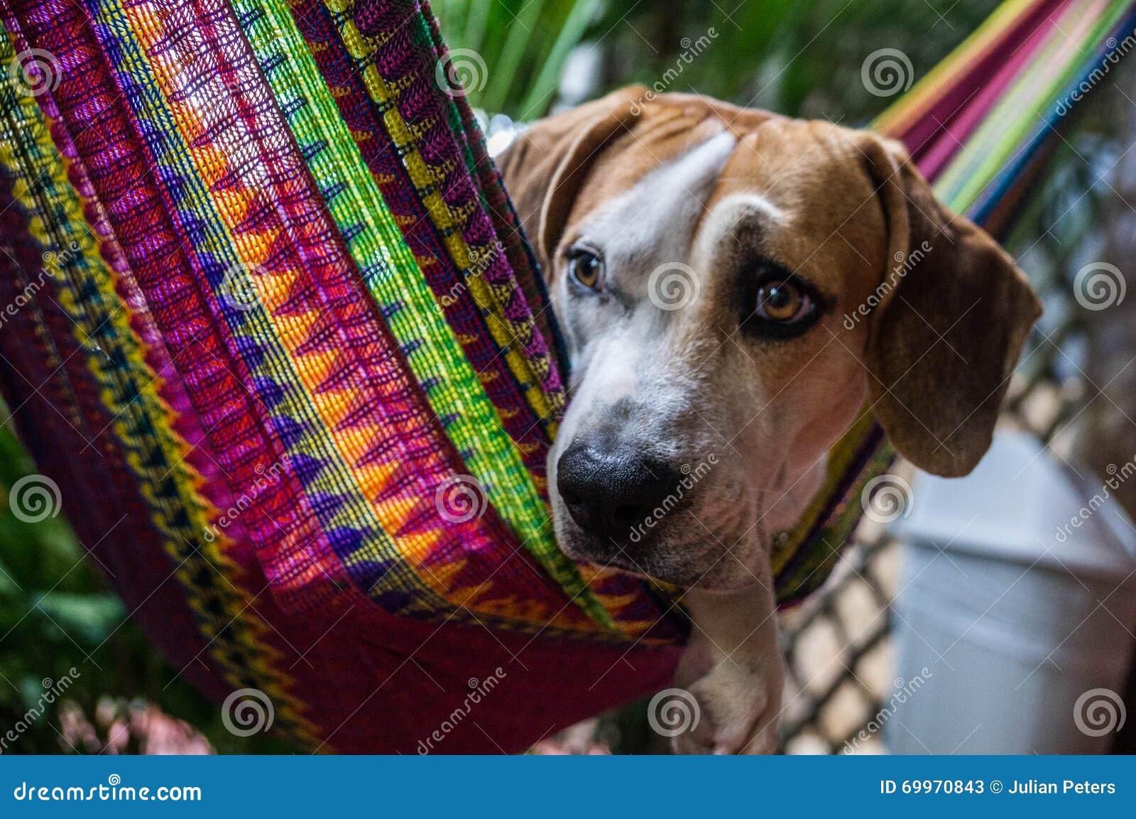 Hund in der bunten Hängematte