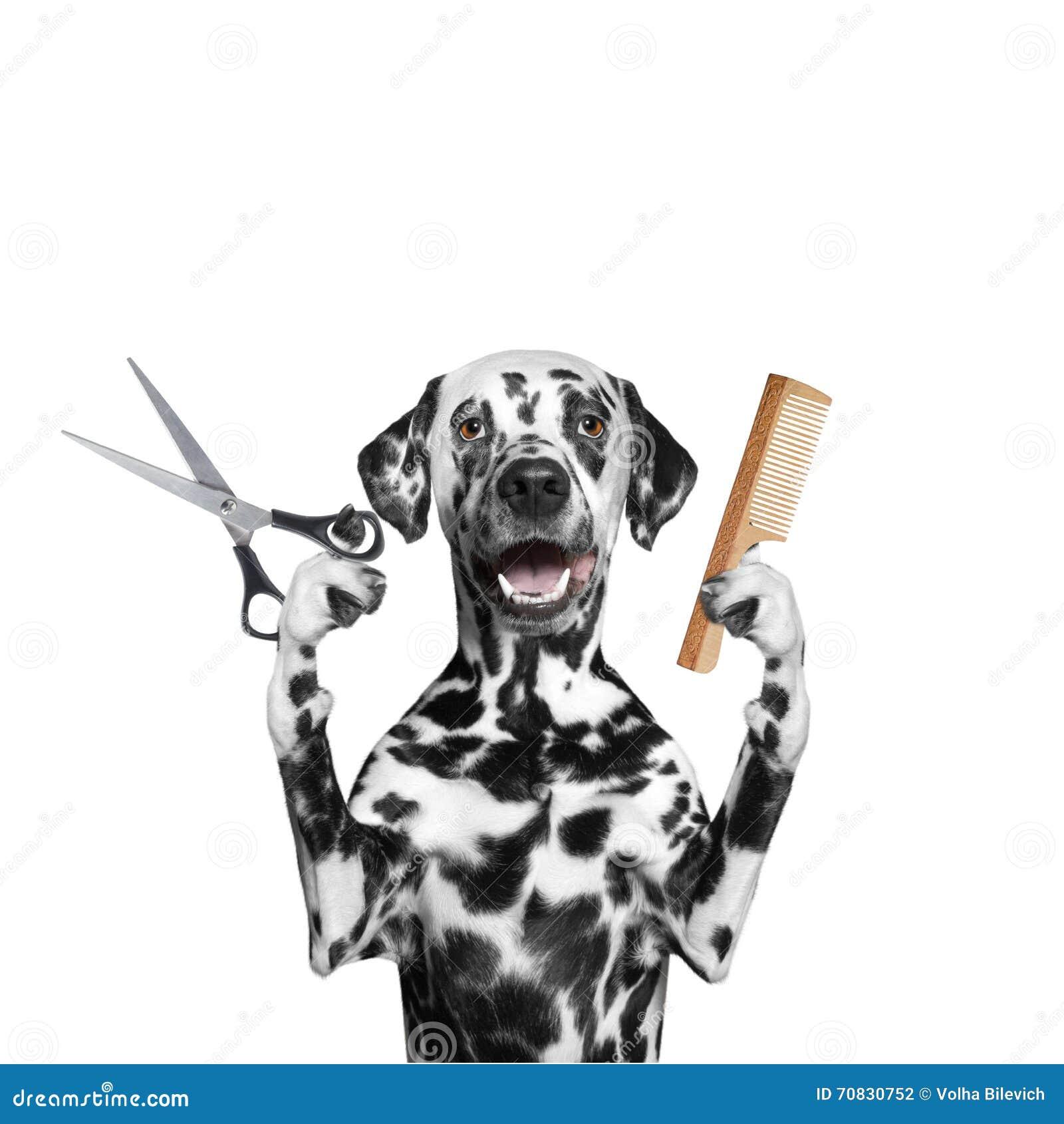 Hund, der das Pflegen mit Scheren und Kamm tut