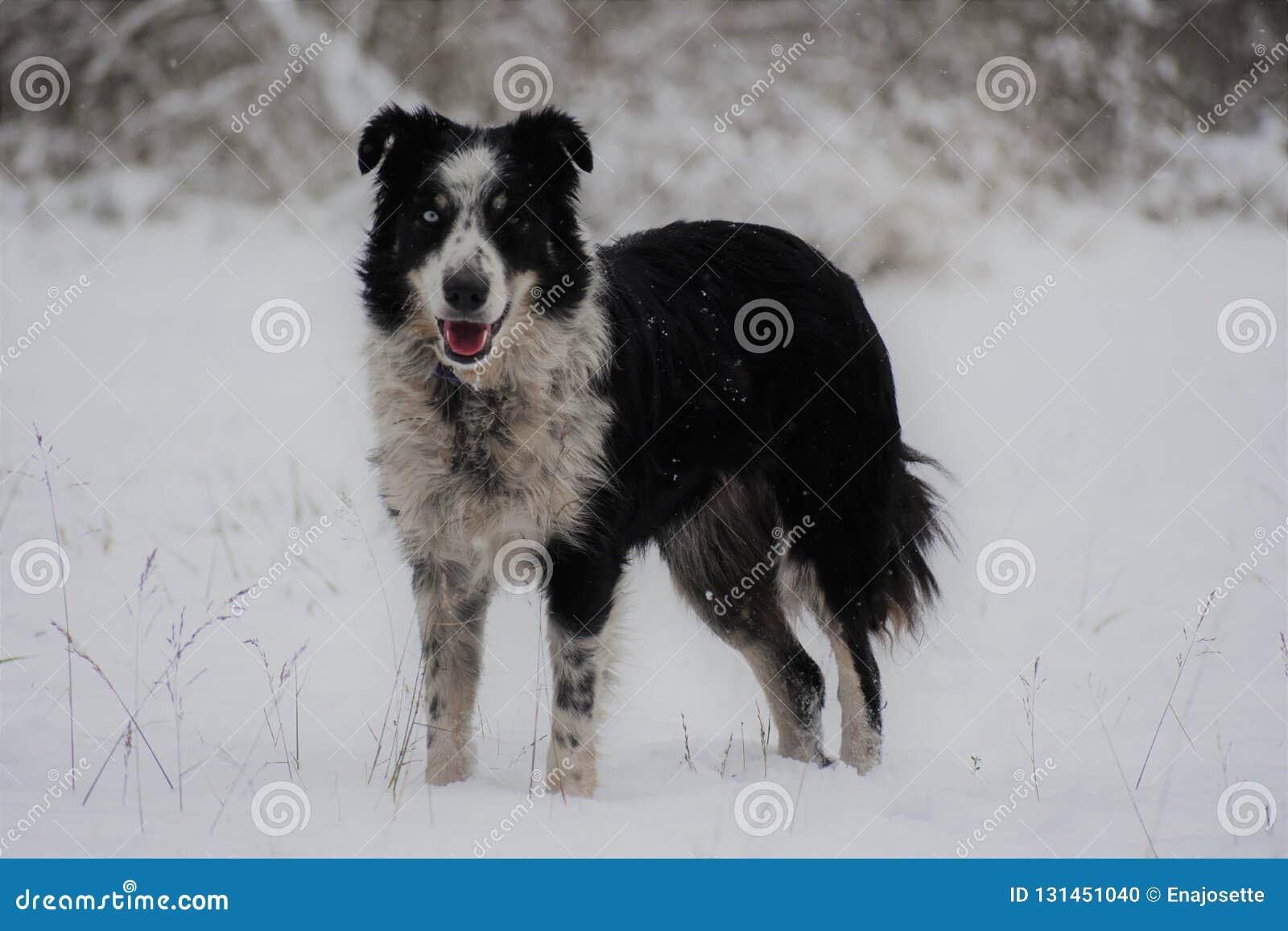 Hund, der durch Schnee läuft