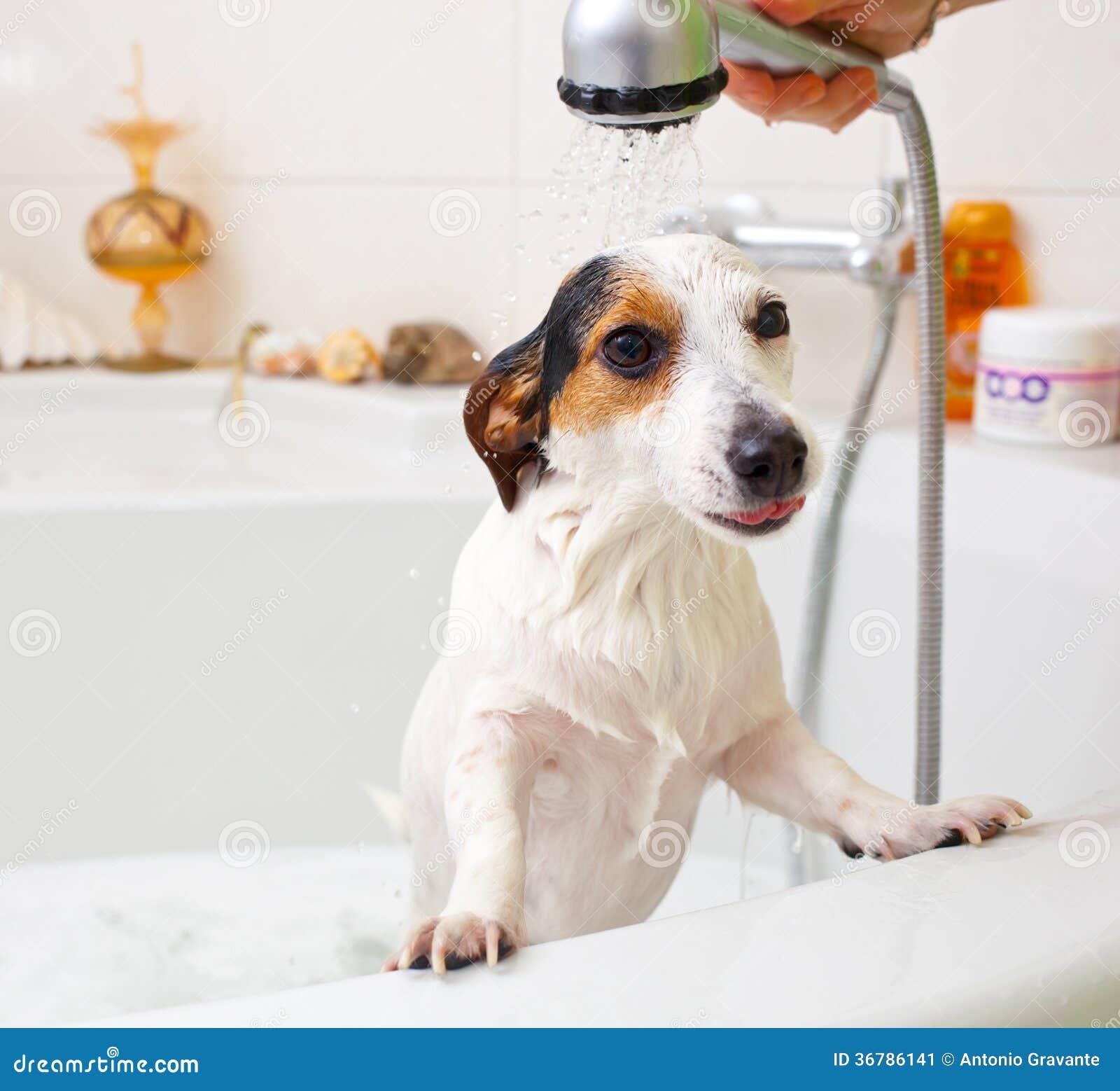 Hund Der Ein Bad In Einer Badewanne Nimmt Stockbild Bild Von