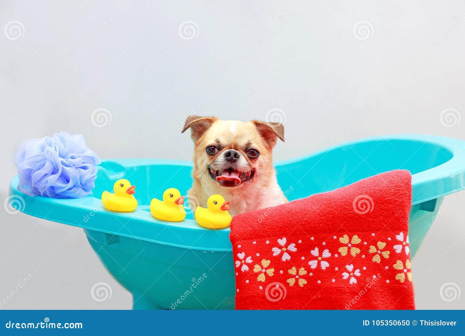 Hund, der eine Dusche nimmt