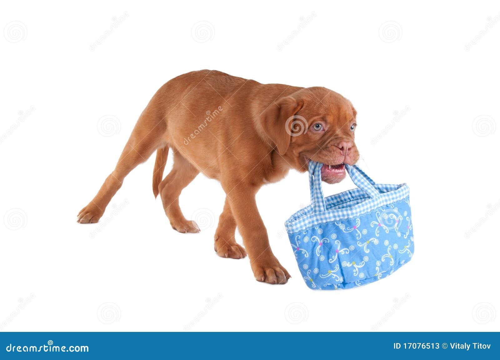 Hund, der einen Beutel trägt