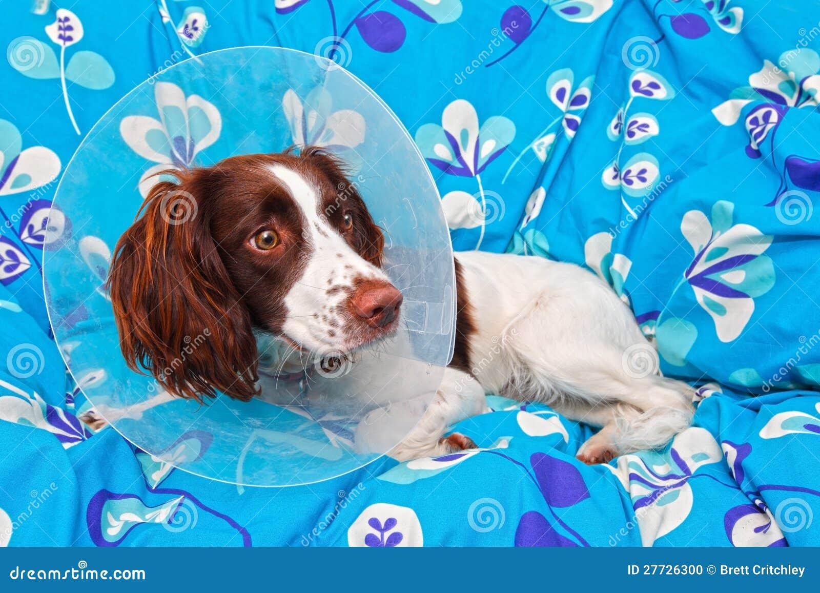 Hund, der einen Kegel trägt