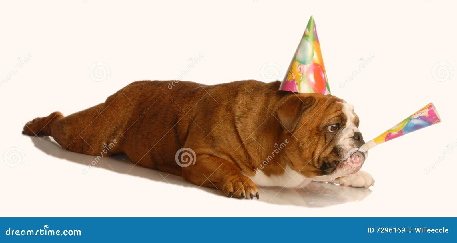 Gedicht Hund Geburtstag