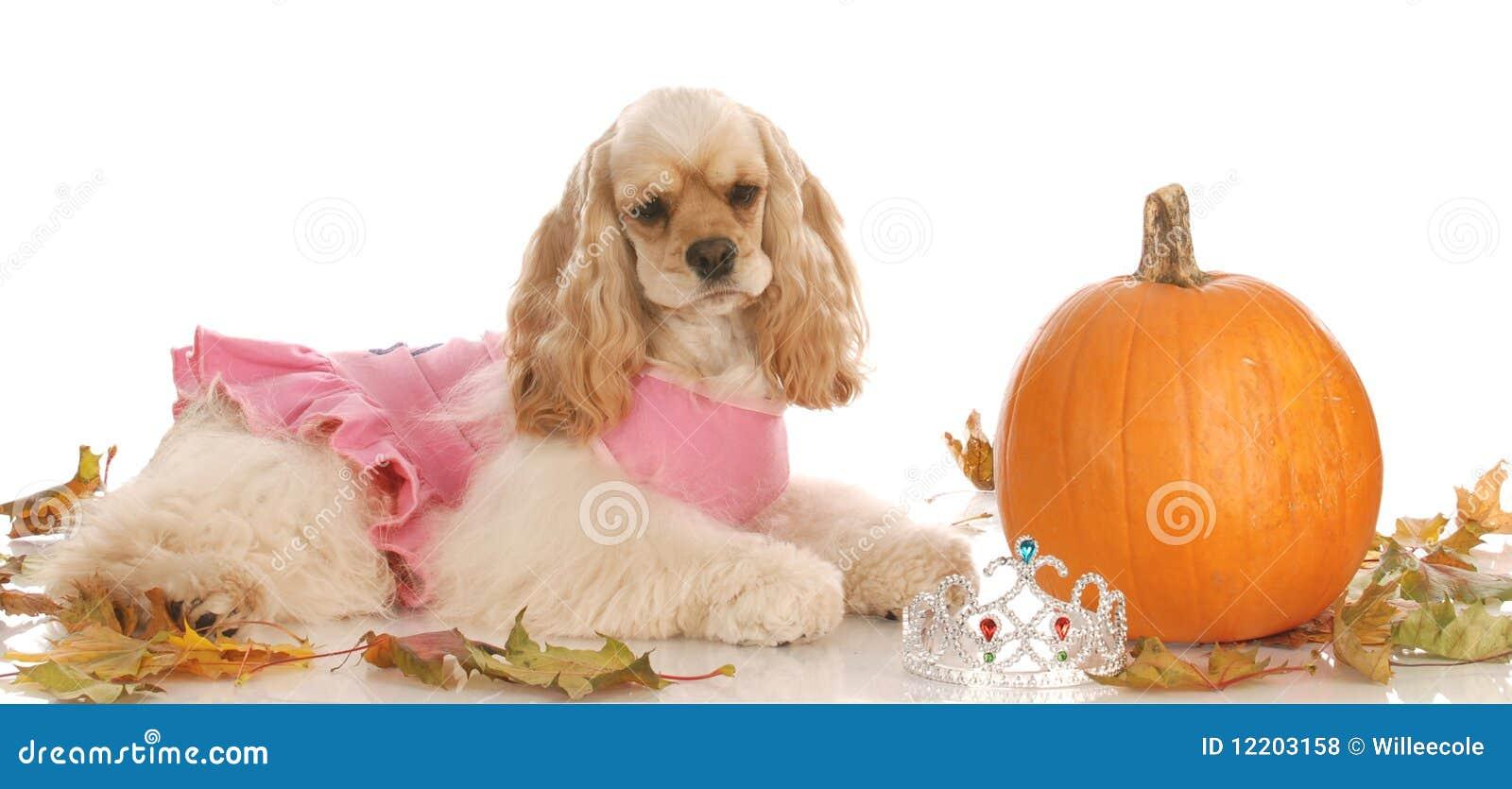 Hund in der Halloween-Einstellung