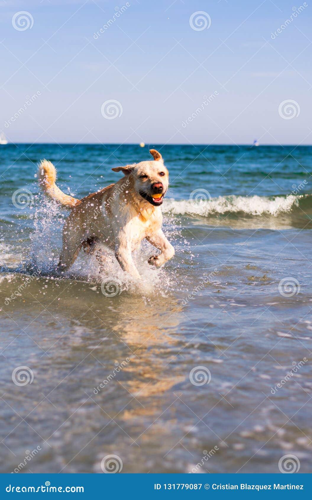 Hund, der im Strand spielt