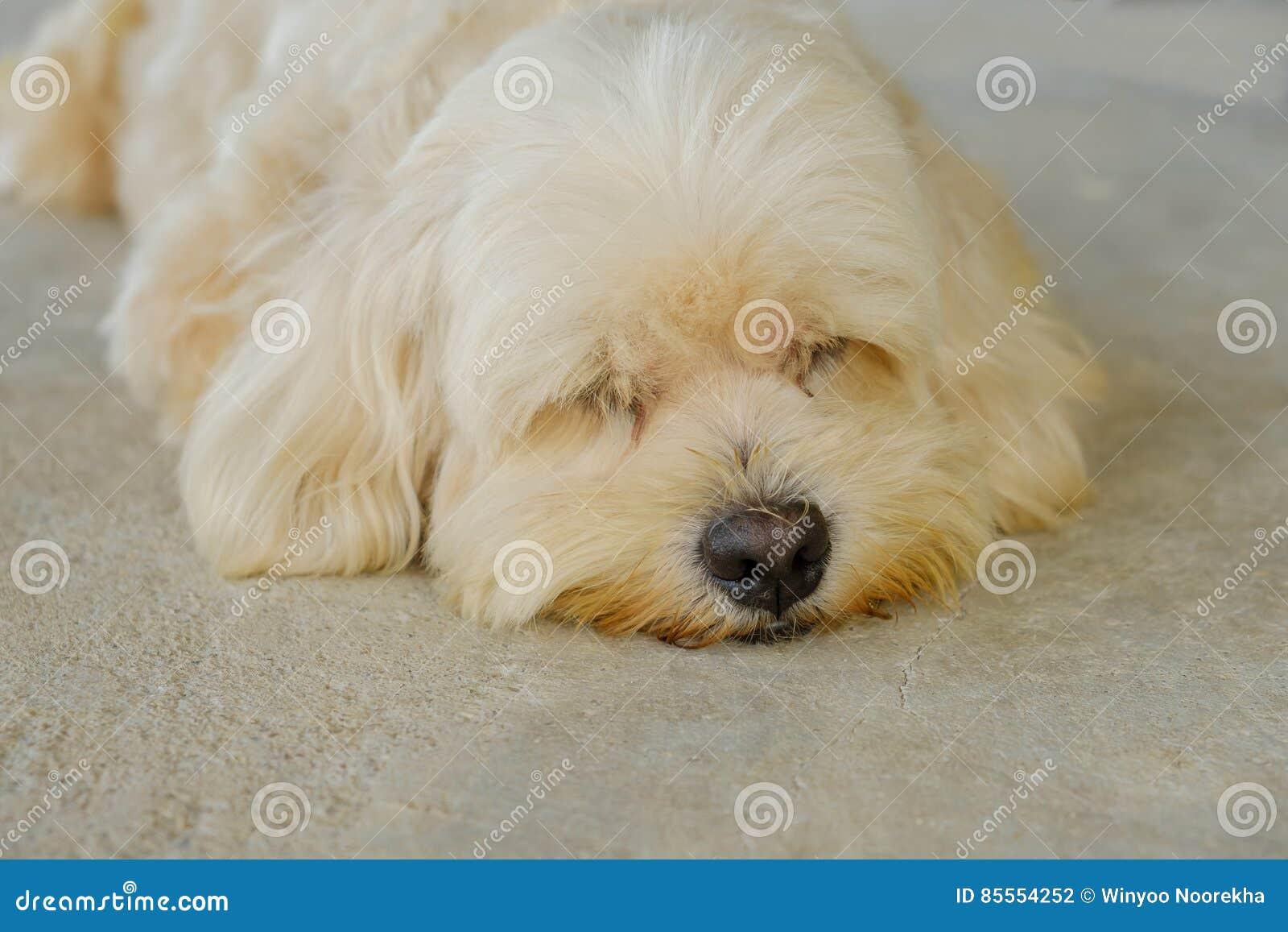 Hund, der jetzt schläft