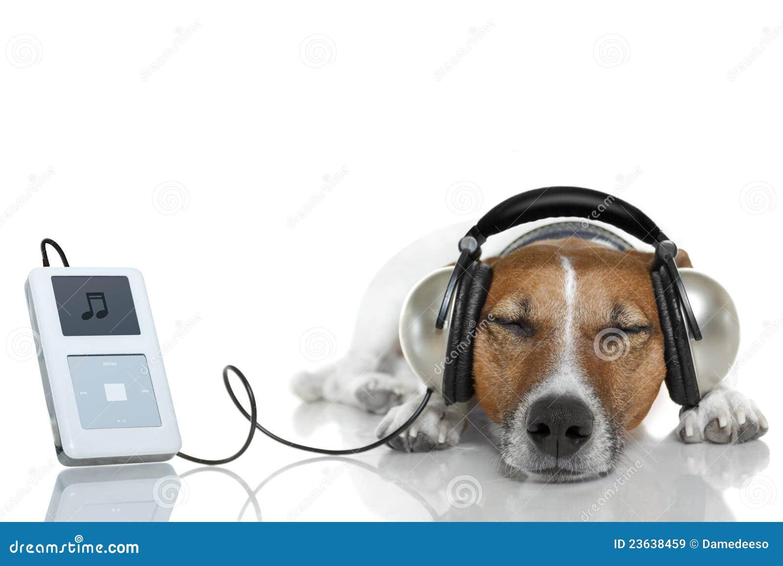 Hund Der Musik H 246 Rt Lizenzfreie Stockbilder Bild 23638459