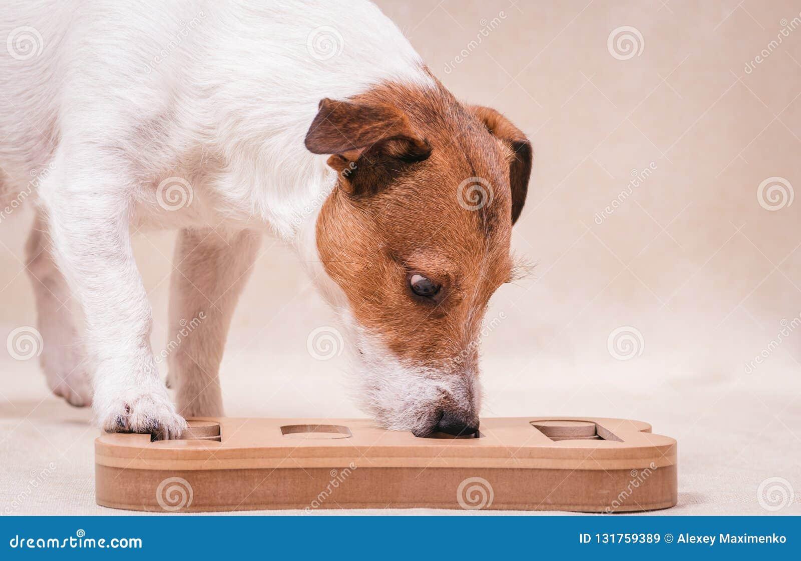 Hund, der Schnüffelnrätselspiel für intellektuelles und nosework Training spielt