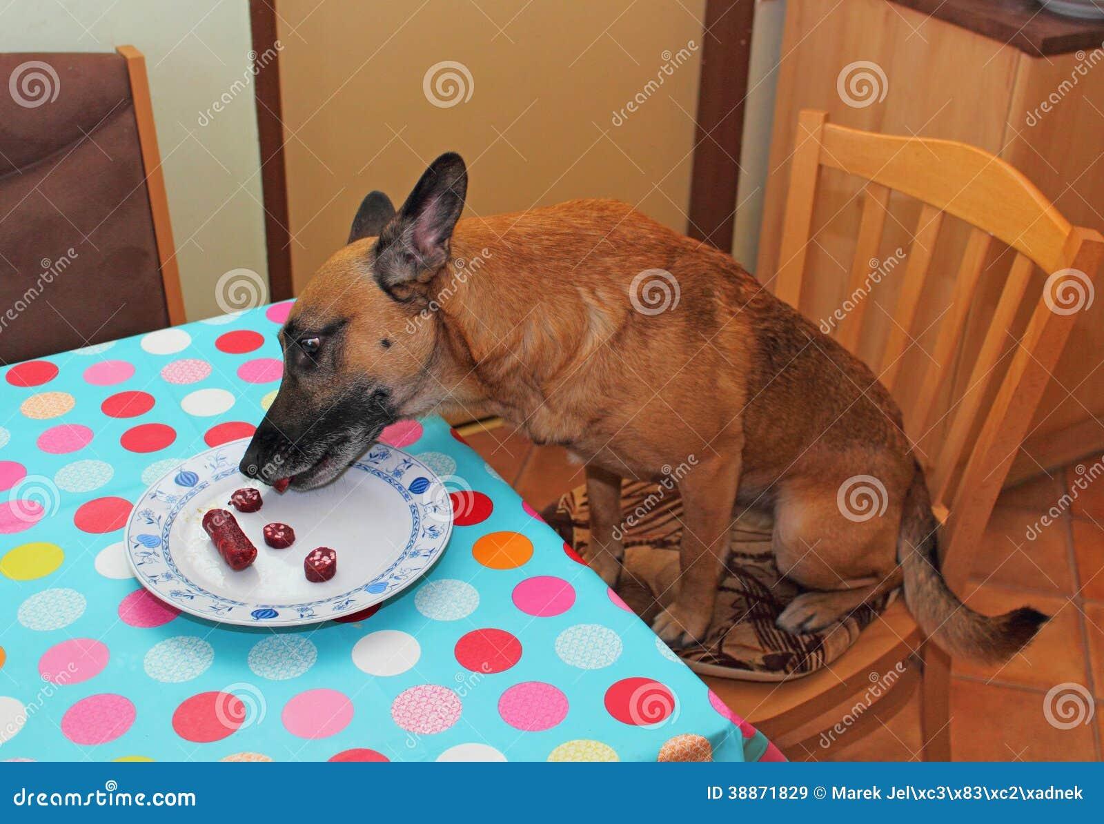 hund der wurst isst stockfoto bild 38871829. Black Bedroom Furniture Sets. Home Design Ideas