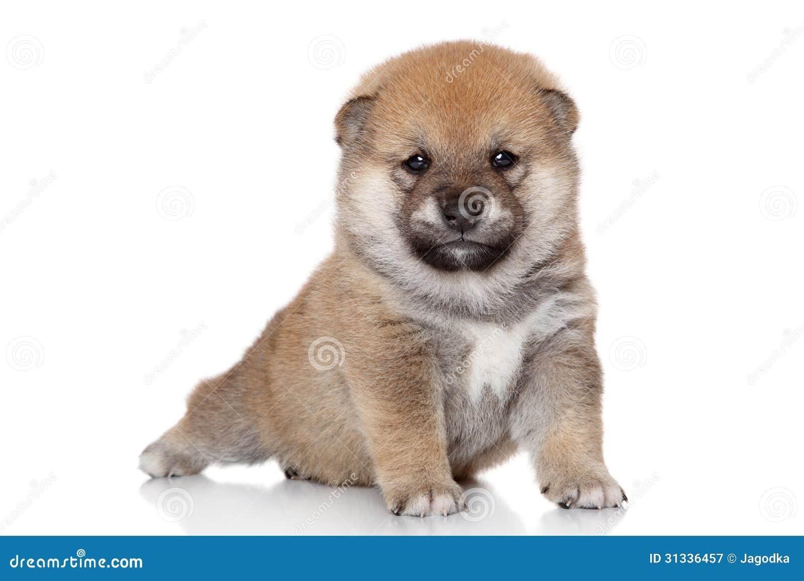 Hund Japanisch