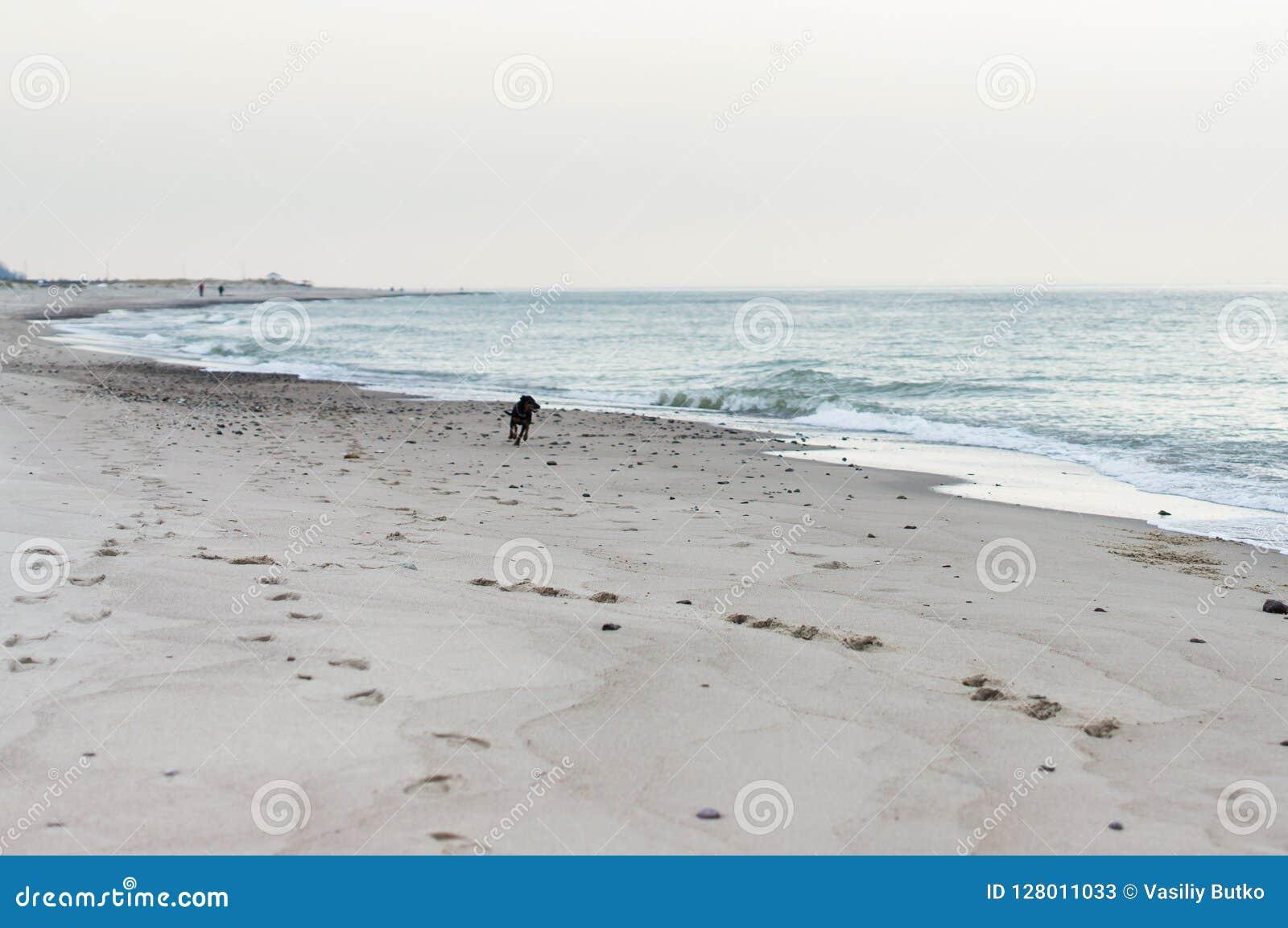 Hund des Meeres 2