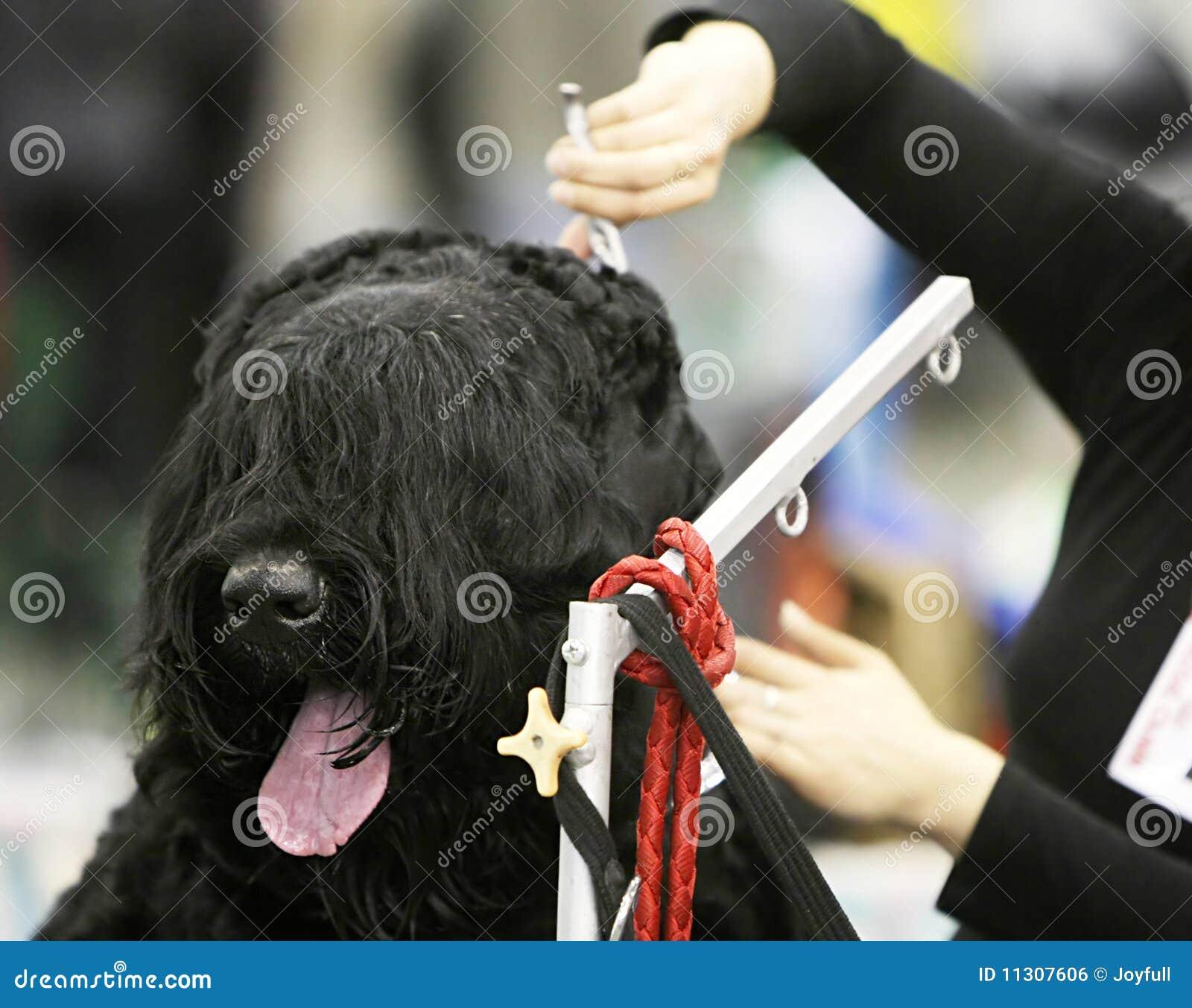 Hund an einem Friseursalon